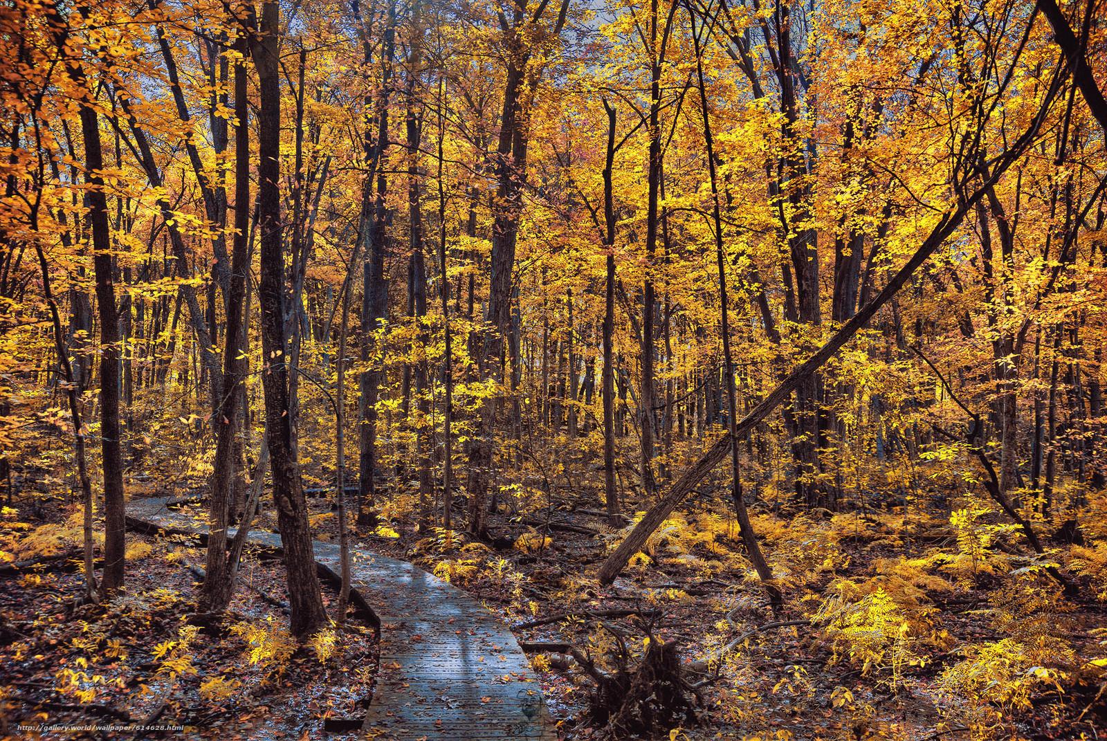 Baixar Wallpaper floresta,  árvores,  outono,  estrada Papis de parede grtis na resoluo 2280x1526 — quadro №614628