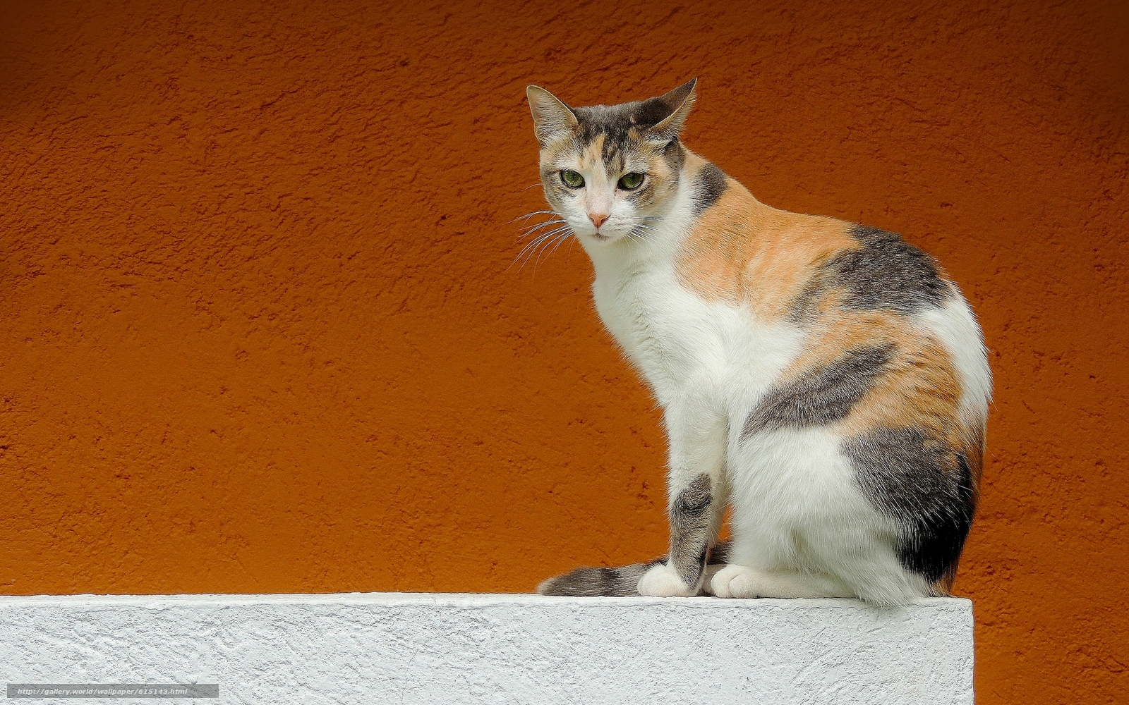Download wallpaper cat,  view,  wall,  background free desktop wallpaper in the resolution 2048x1280 — picture №615143