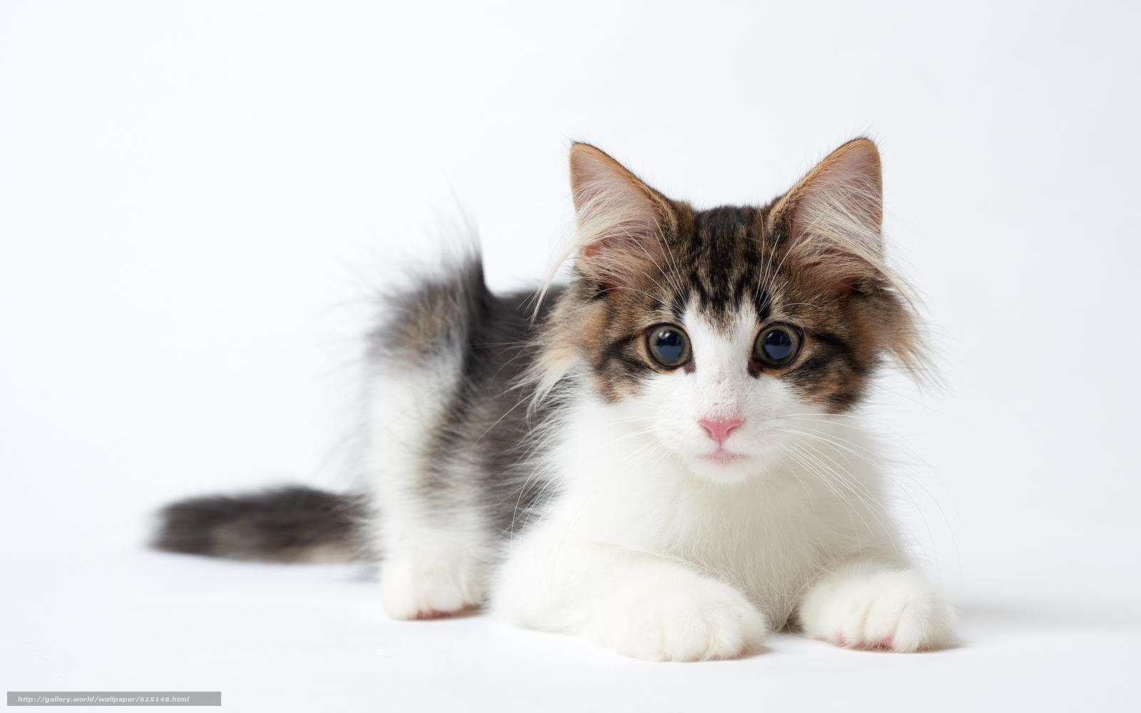 Baby Cat Black