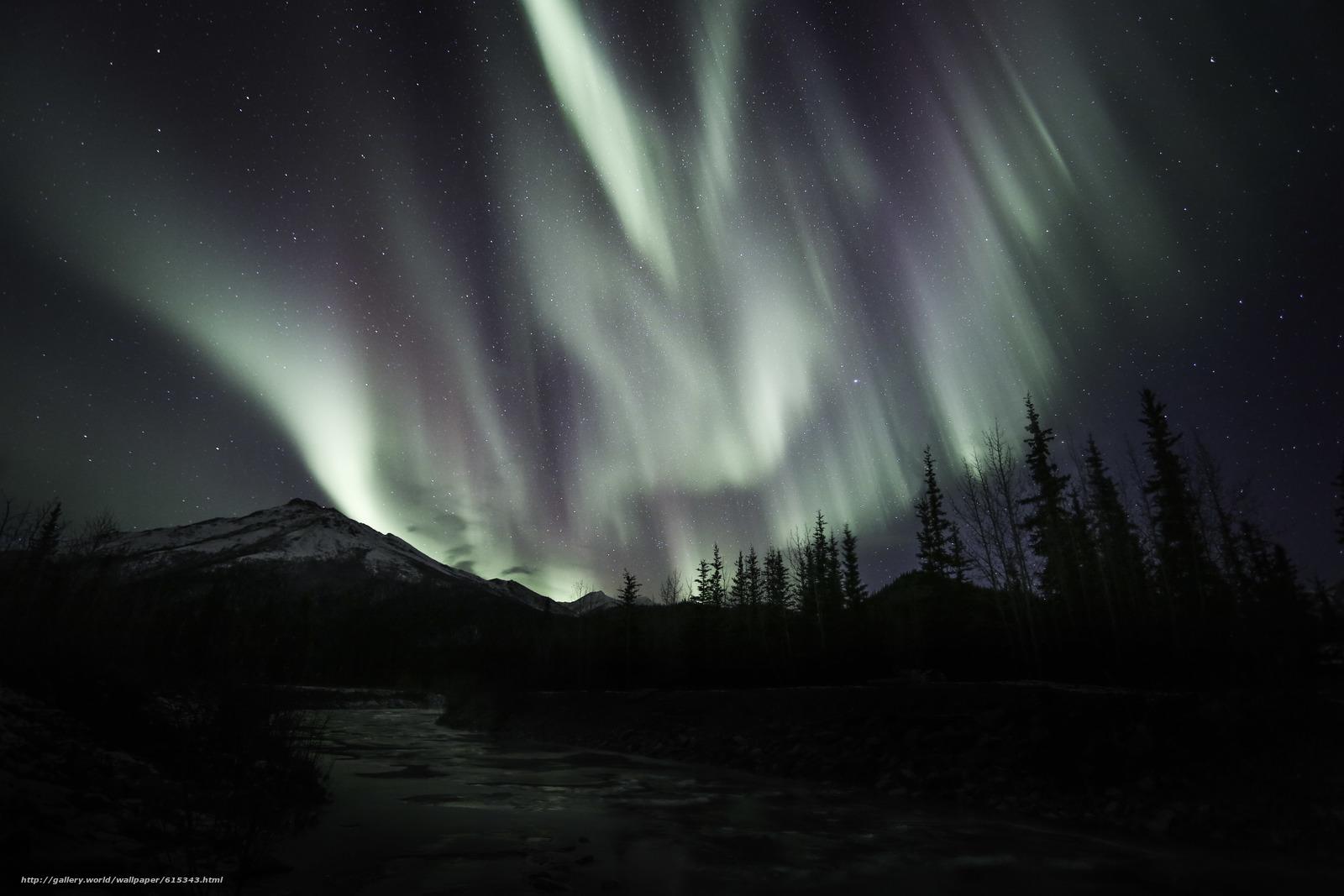 scaricare gli sfondi Aurora Borealis,  Abete rosso,  Catena montuosa di Brooks,  A nord Sfondi gratis per la risoluzione del desktop 5760x3840 — immagine №615343