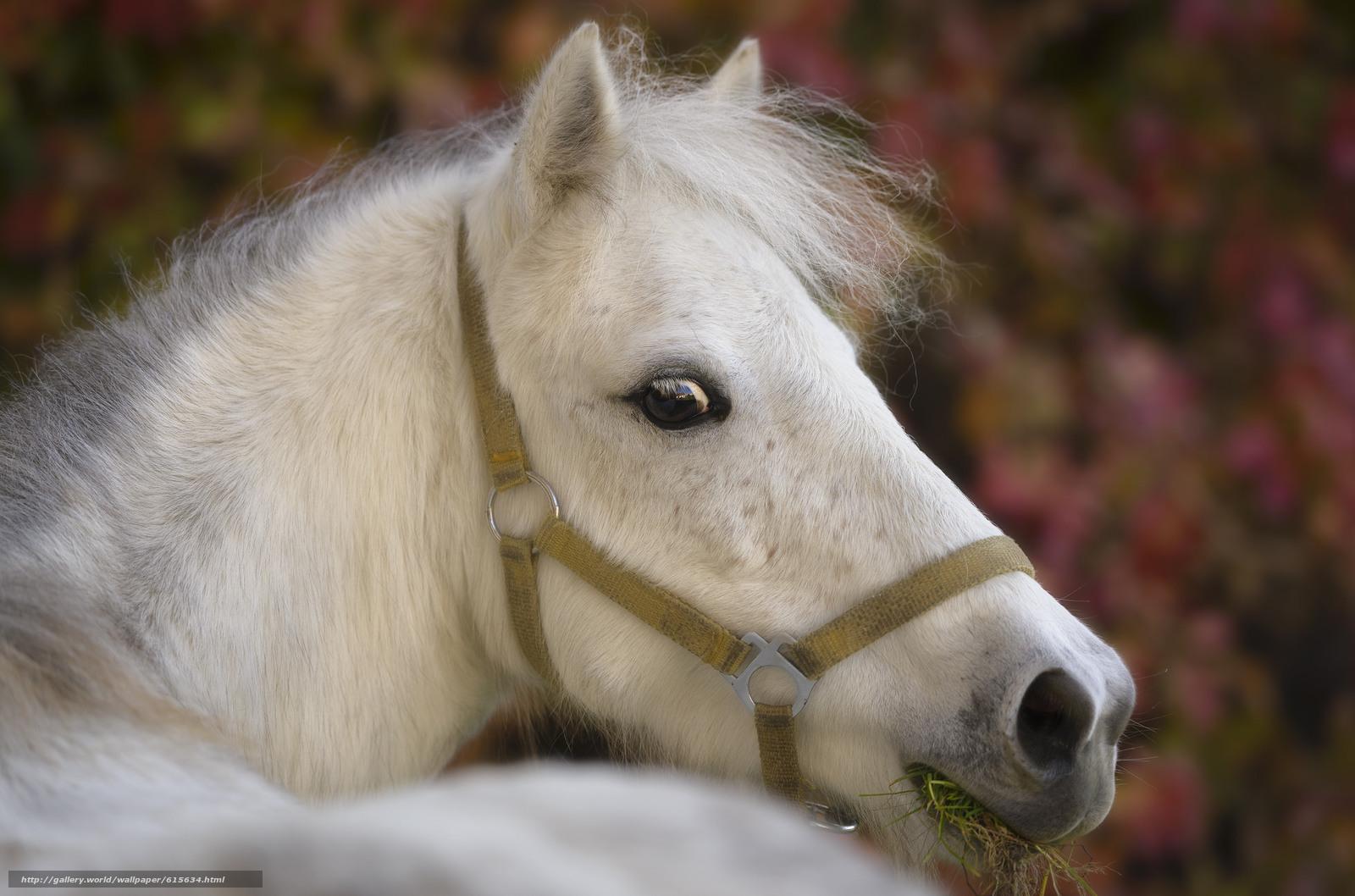 Descargar gratis caballo,  caballo,  cabeza,  Hocico Fondos de escritorio en la resolucin 2048x1354 — imagen №615634