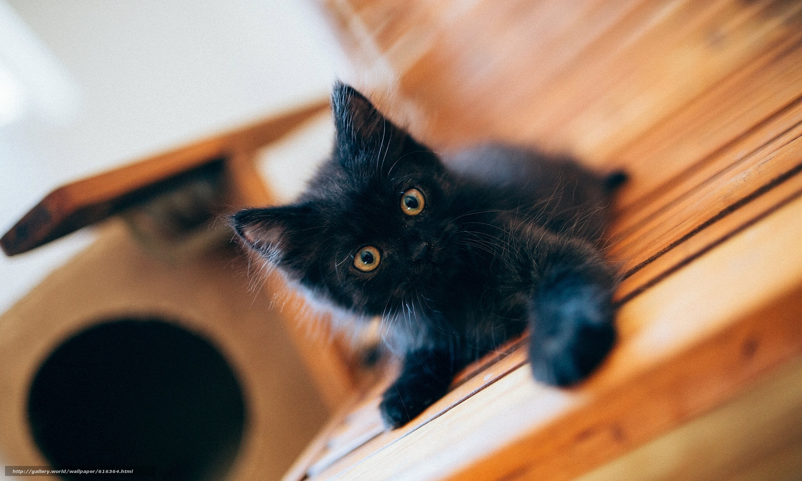 Download Wallpaper Black Kitten Kitten Black Baby Free Desktop Wallpaper In The Resolution 2048x1230 Picture 616364