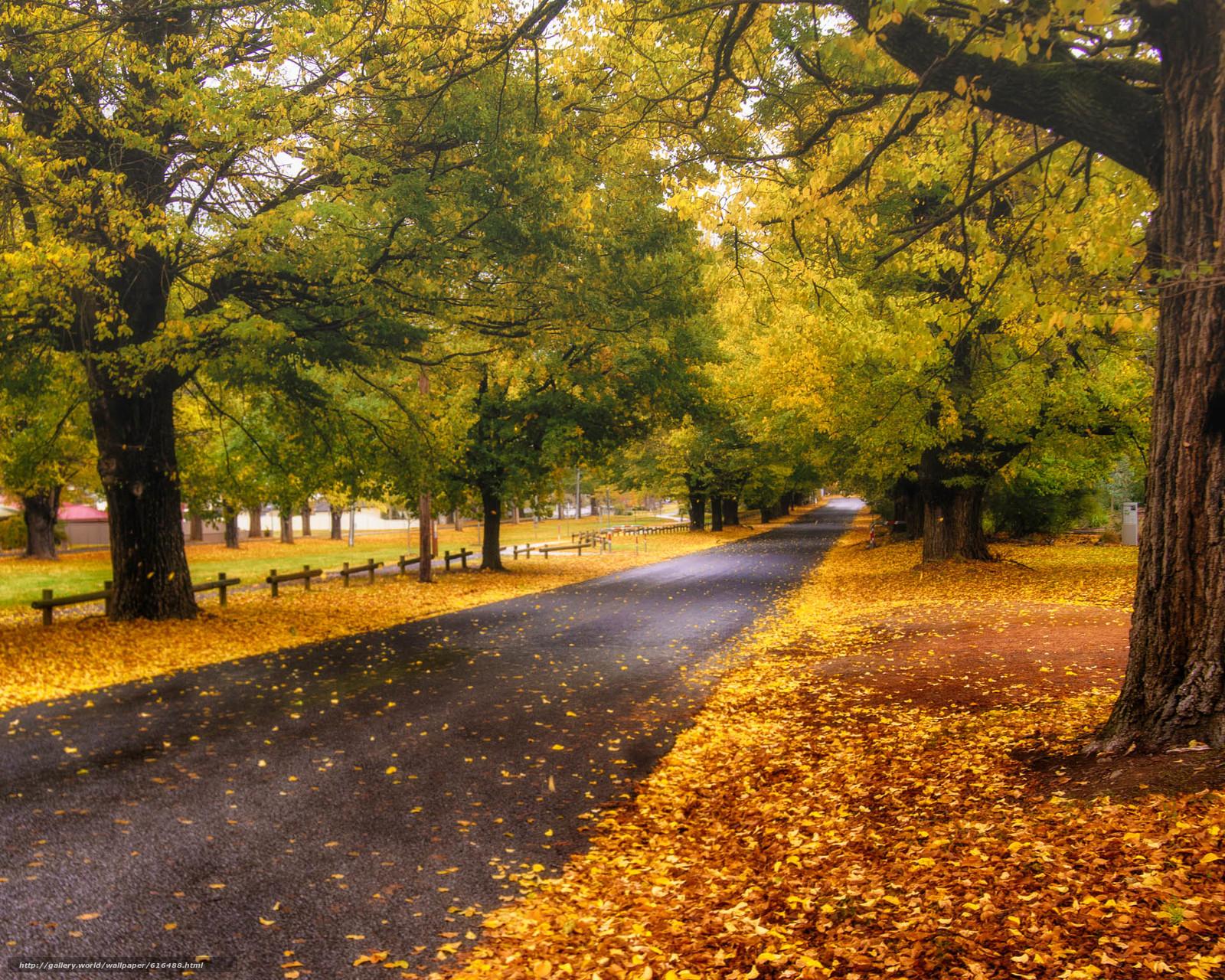 下载壁纸 秋,  道路,  树,  景观 免费为您的桌面分辨率的壁纸 1920x1536 — 图片 №616488