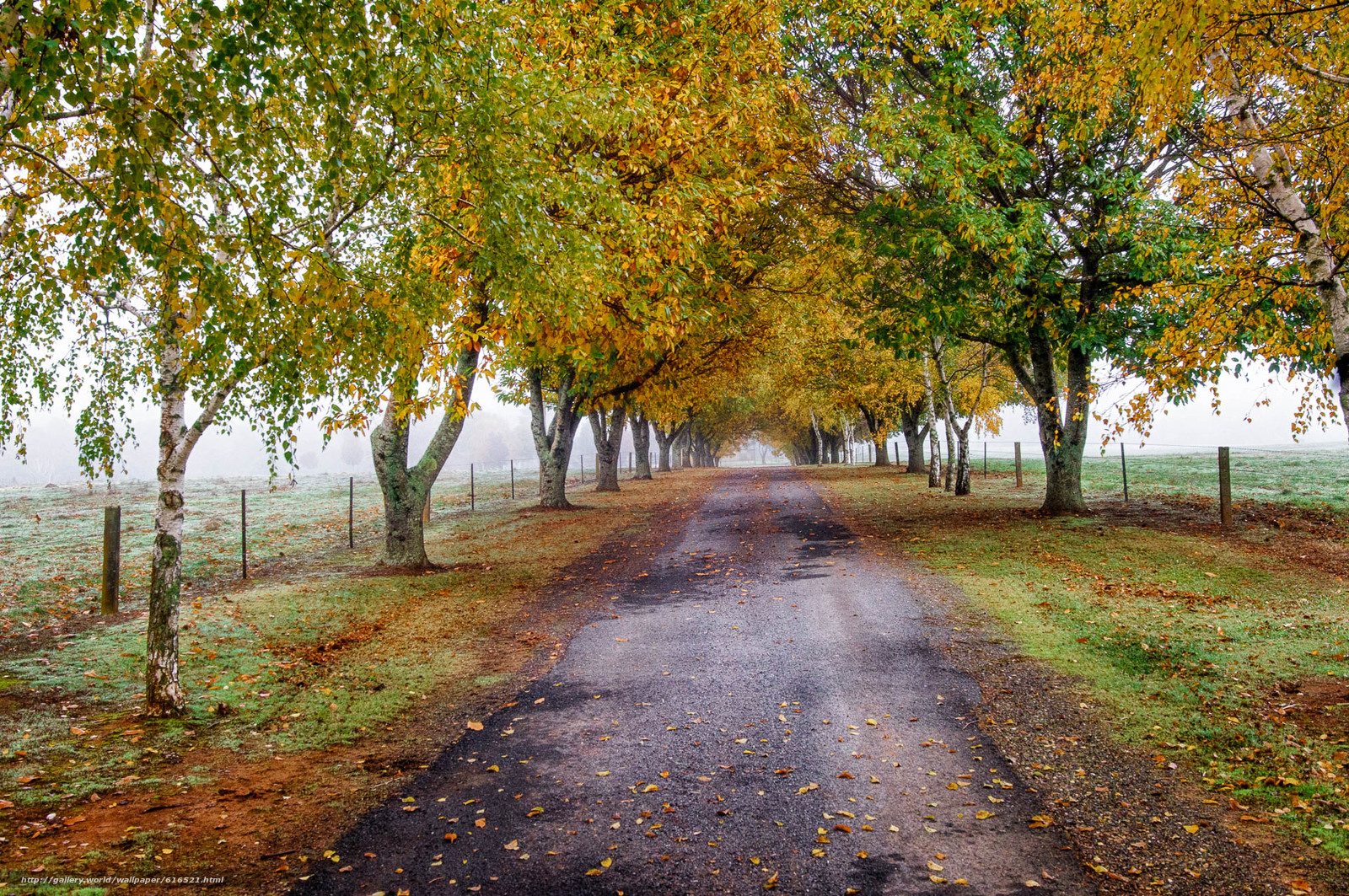 Download wallpaper autumn,  road,  trees,  landscape free desktop wallpaper in the resolution 1920x1276 — picture №616521