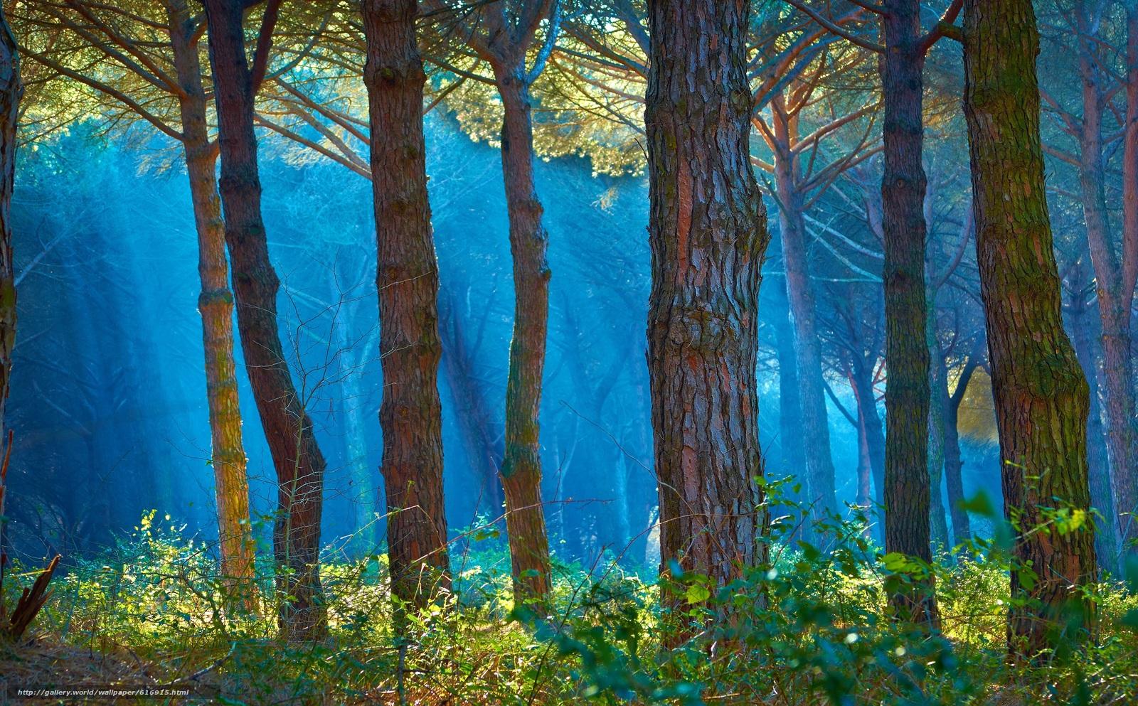 scaricare gli sfondi foresta,  alberi,  haze,  prioda Sfondi gratis per la risoluzione del desktop 3839x2382 — immagine №616915