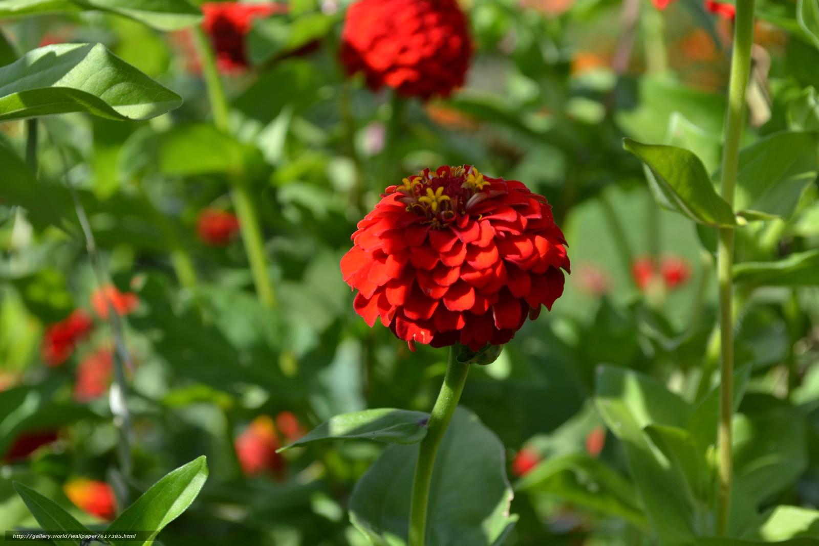Descargar gratis Belleza,  sombra,  alfombra de flores Fondos de escritorio en la resolucin 4608x3072 — imagen №617385