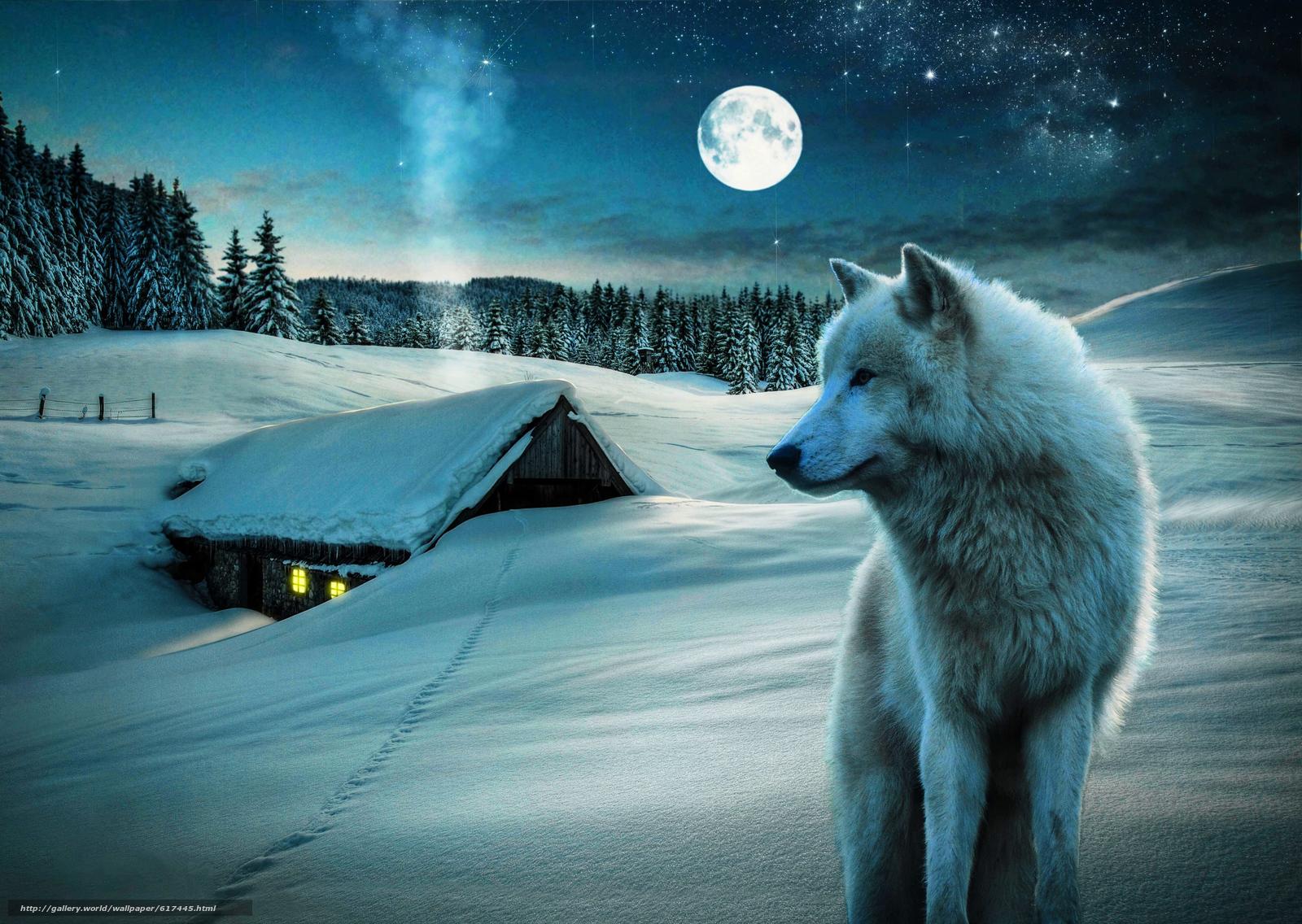 scaricare gli sfondi inverno,  luna,  domestico,  lupo Sfondi gratis per la risoluzione del desktop 4224x3000 — immagine №617445