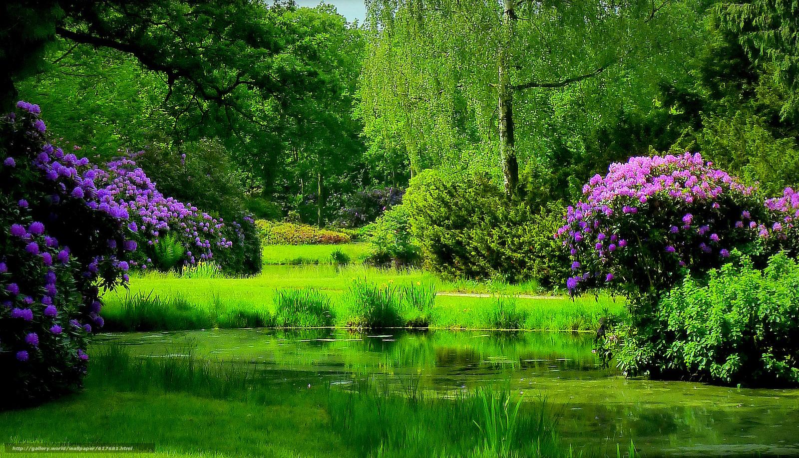 下载壁纸 湖,  池塘,  森林,  树 免费为您的桌面分辨率的壁纸 2479x1423 — 图片 №617681