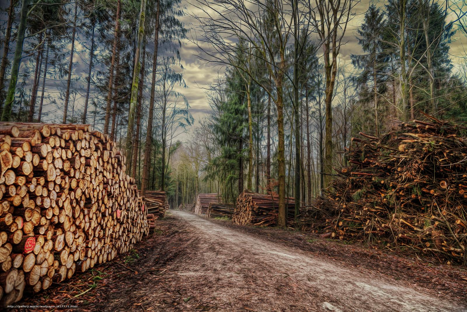 Обои дрова. Пейзажи foto 19