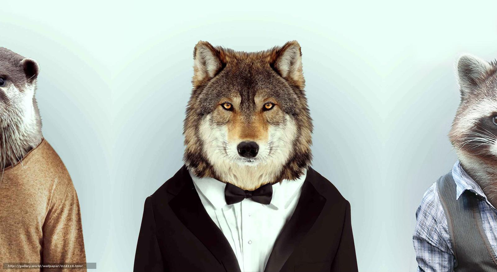 scaricare gli sfondi lupo,  procione,  castoro,  compartecipazione Sfondi gratis per la risoluzione del desktop 2814x1540 — immagine №618115