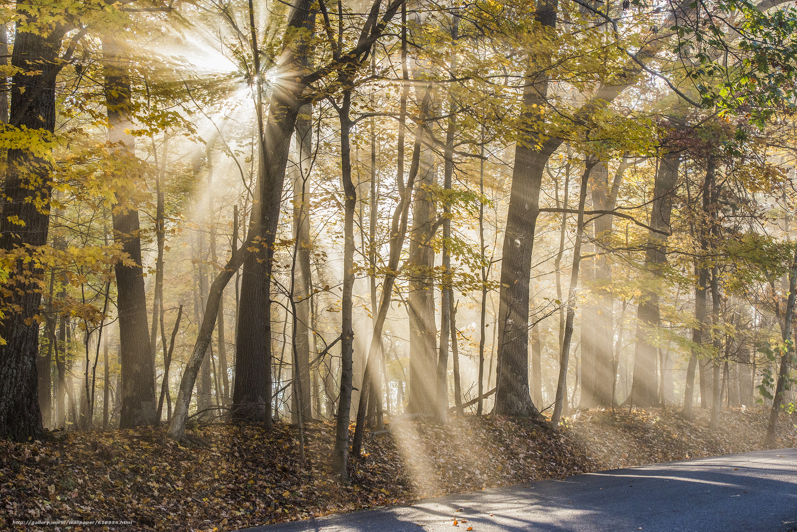 Download wallpaper forest,  trees,  autumn,  road free desktop wallpaper in the resolution 2400x1602 — picture №618956