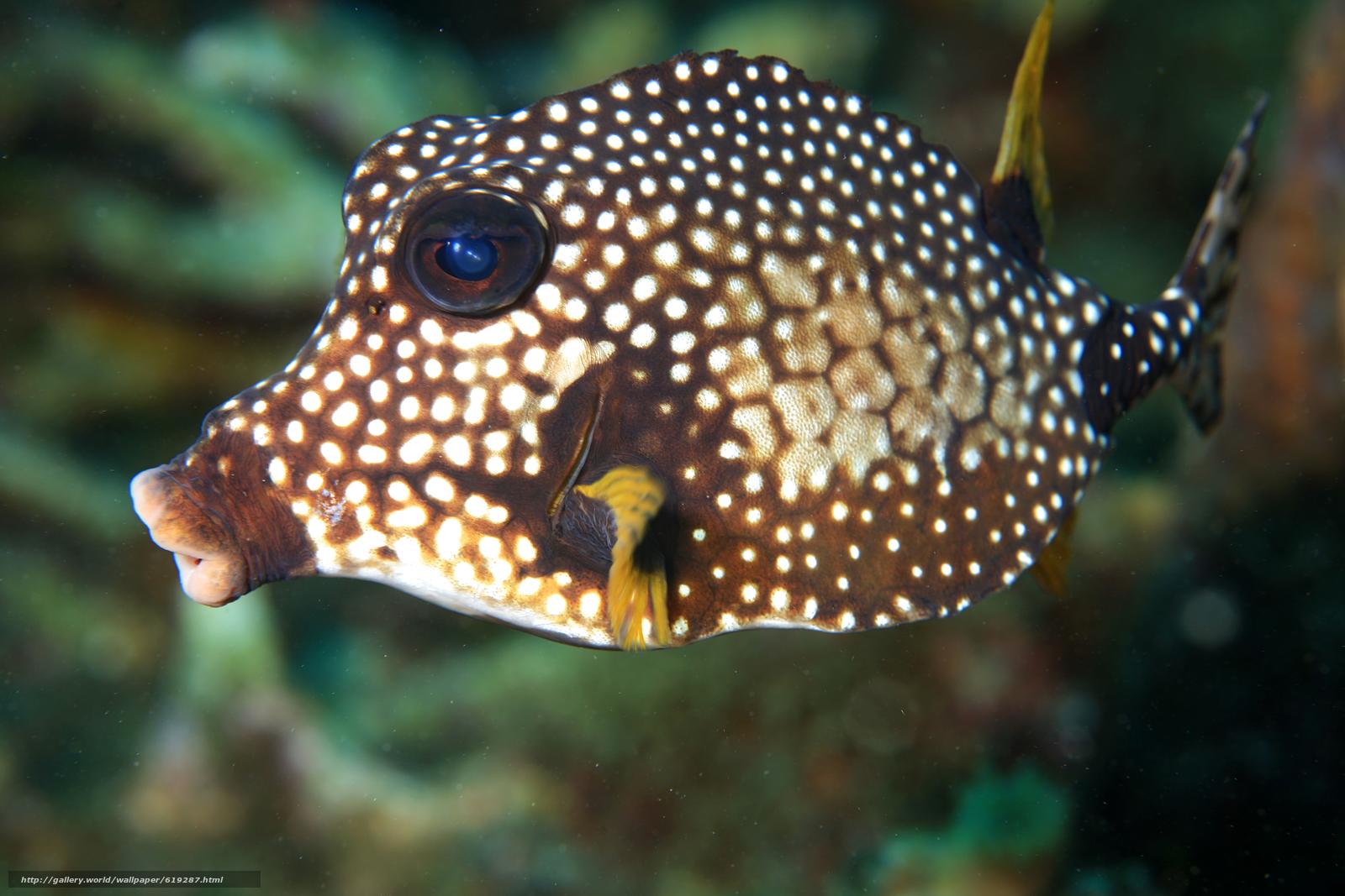 scaricare gli sfondi FISH,  Oval Luna,  sott'acqua,  tropicale Sfondi gratis per la risoluzione del desktop 4368x2912 — immagine №619287
