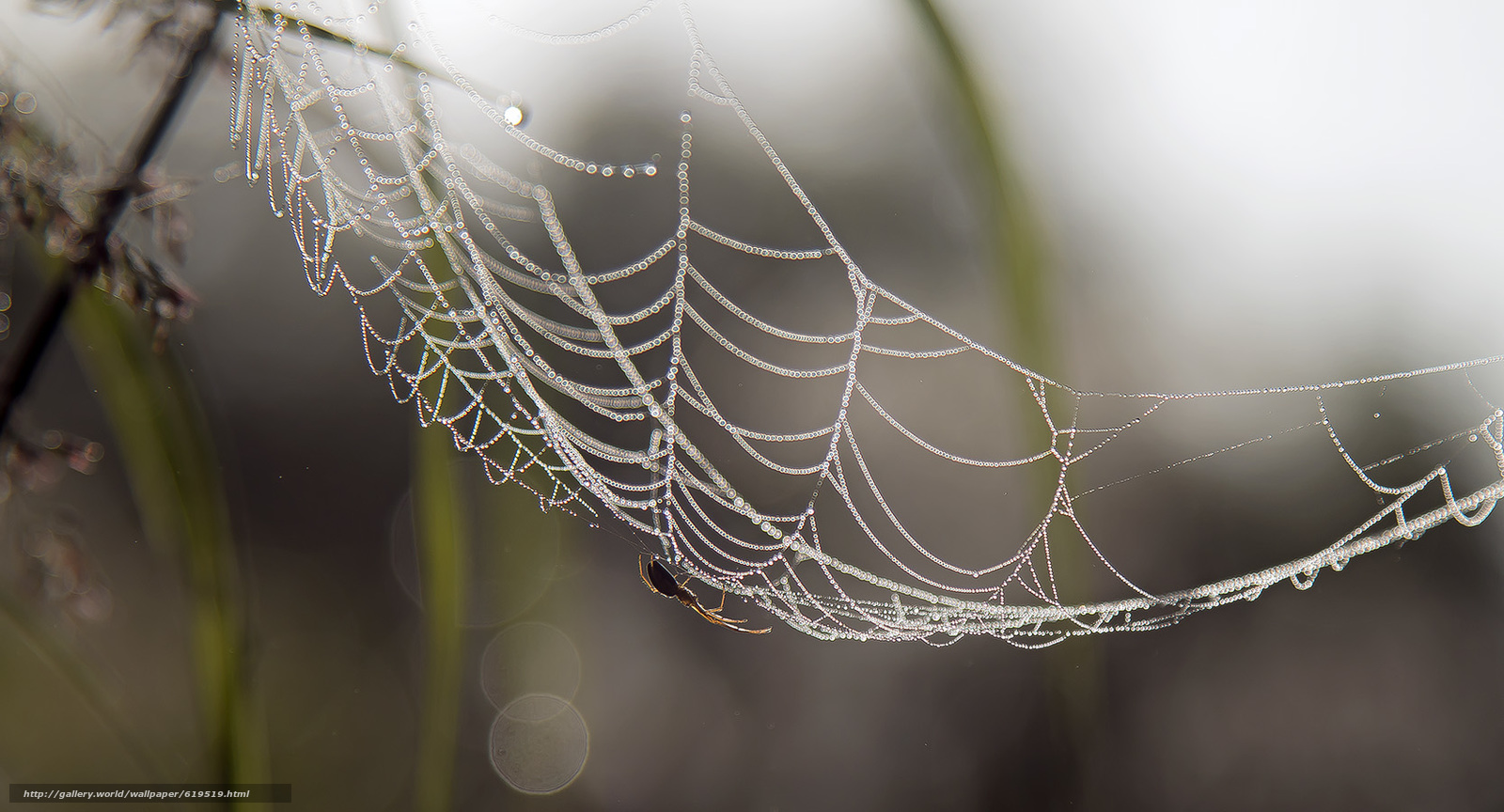Download wallpaper spider,  web,  August,  summer free desktop wallpaper in the resolution 1667x900 — picture №619519