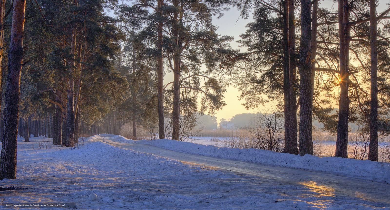 Скачать обои зима,  закат,  лес,  деревья бесплатно для рабочего стола в разрешении 2000x1080 — картинка №619535