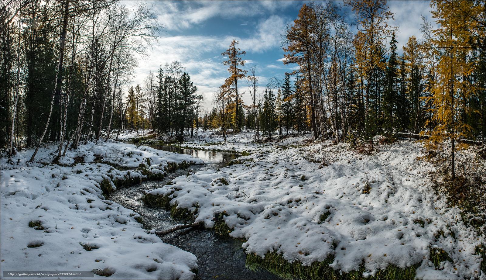 scaricare gli sfondi piccolo fiume,  torrente,  foresta,  autunno Sfondi gratis per la risoluzione del desktop 4506x2594 — immagine №620510