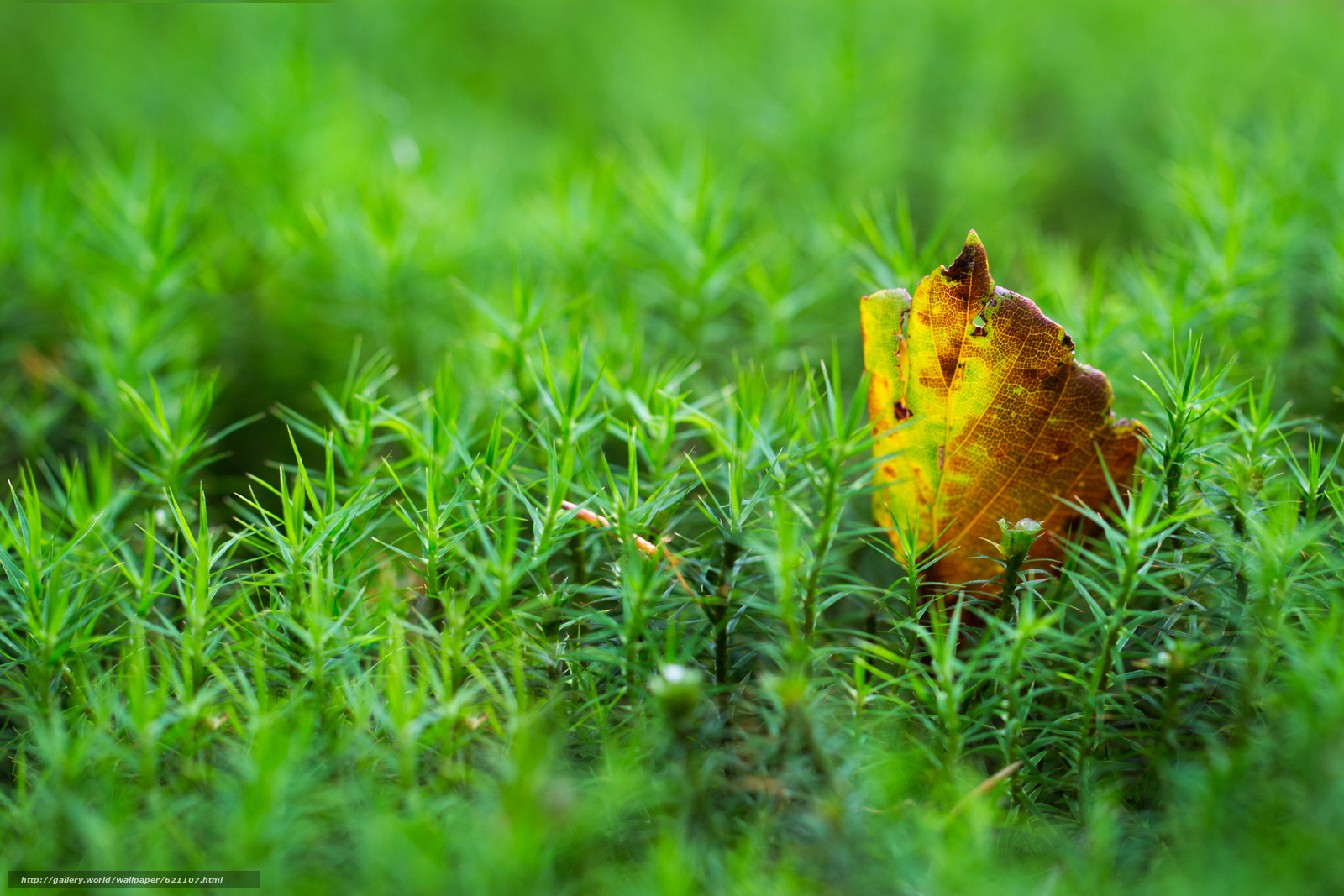 Скачать обои мох,  лист,  макро бесплатно для рабочего стола в разрешении 5184x3456 — картинка №621107