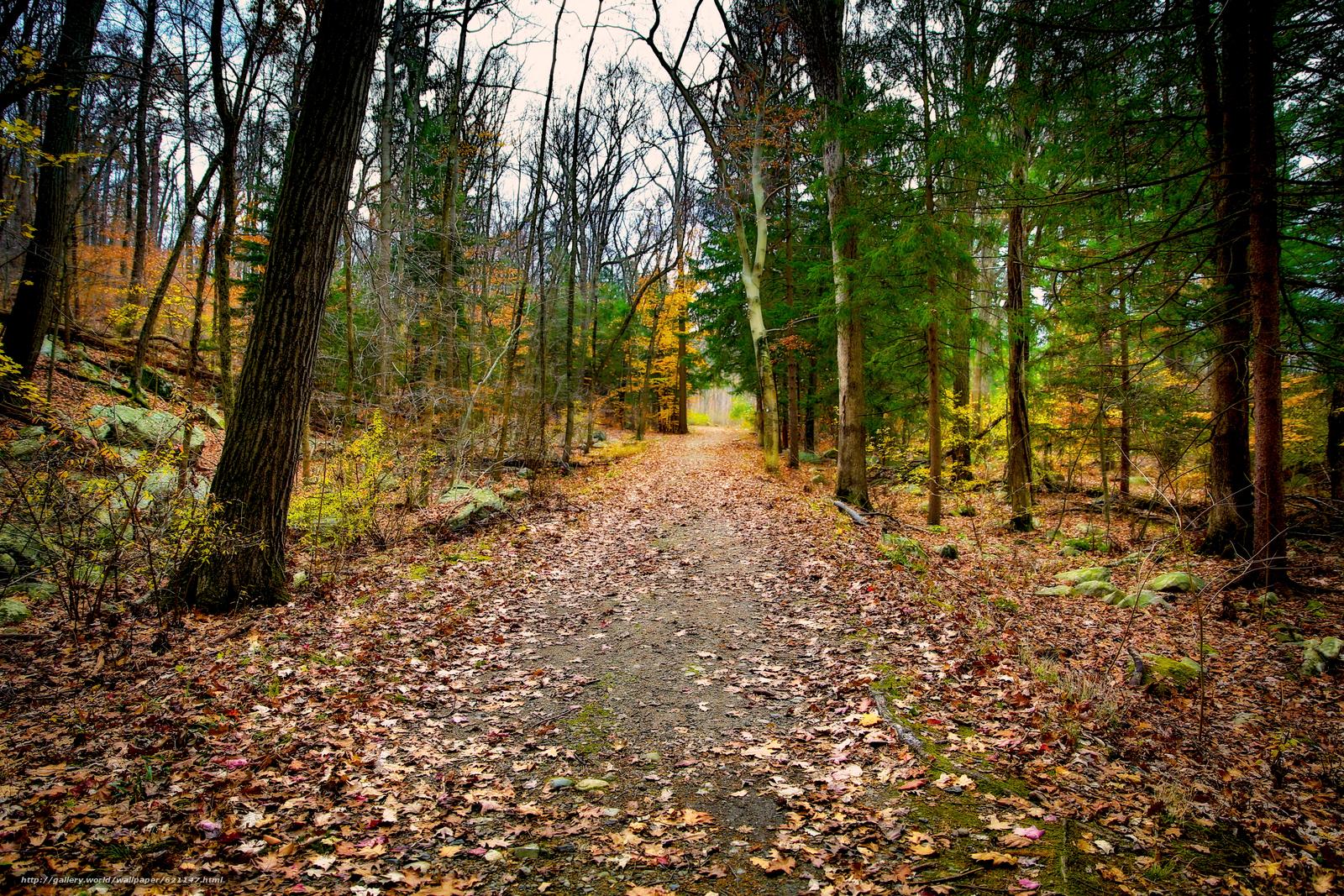 Tlcharger Fond d'ecran forêt,  arbres,  automne,  route Fonds d'ecran gratuits pour votre rsolution du bureau 5760x3840 — image №621147
