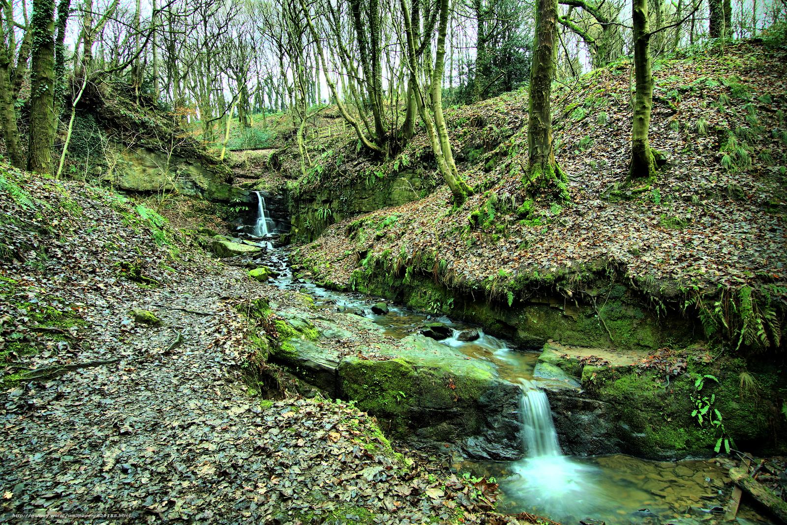 scaricare gli sfondi foresta,  alberi,  piccolo fiume,  torrente Sfondi gratis per la risoluzione del desktop 2352x1568 — immagine №621158