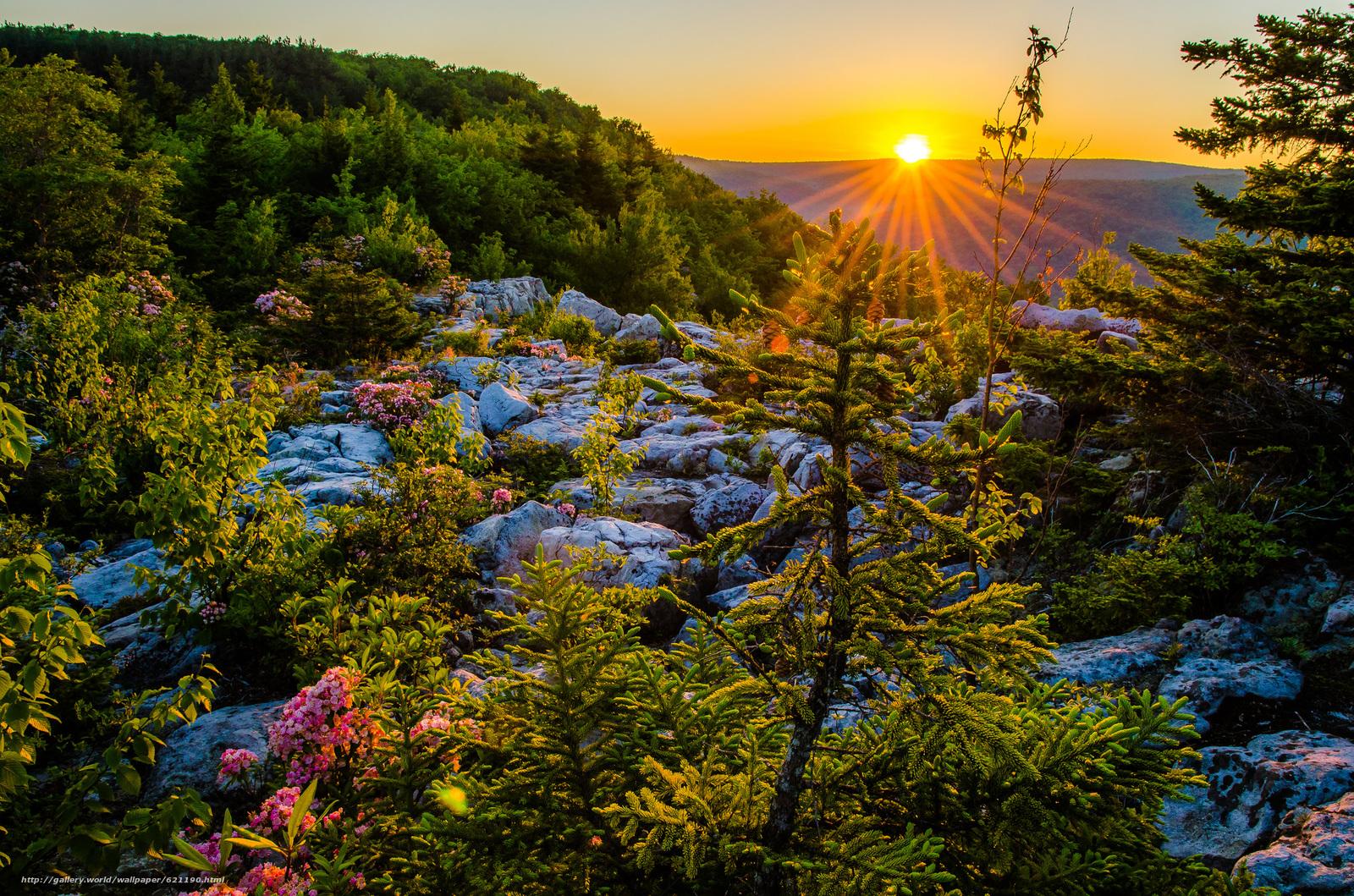 descarca imagini de fundal Dolly sods Wilderness,  Monongahela National Forest,  Munții Allegheny,  West Virginia Imagini de fundal gratuite pentru rezoluia desktop 2048x1356 — imagine №621190