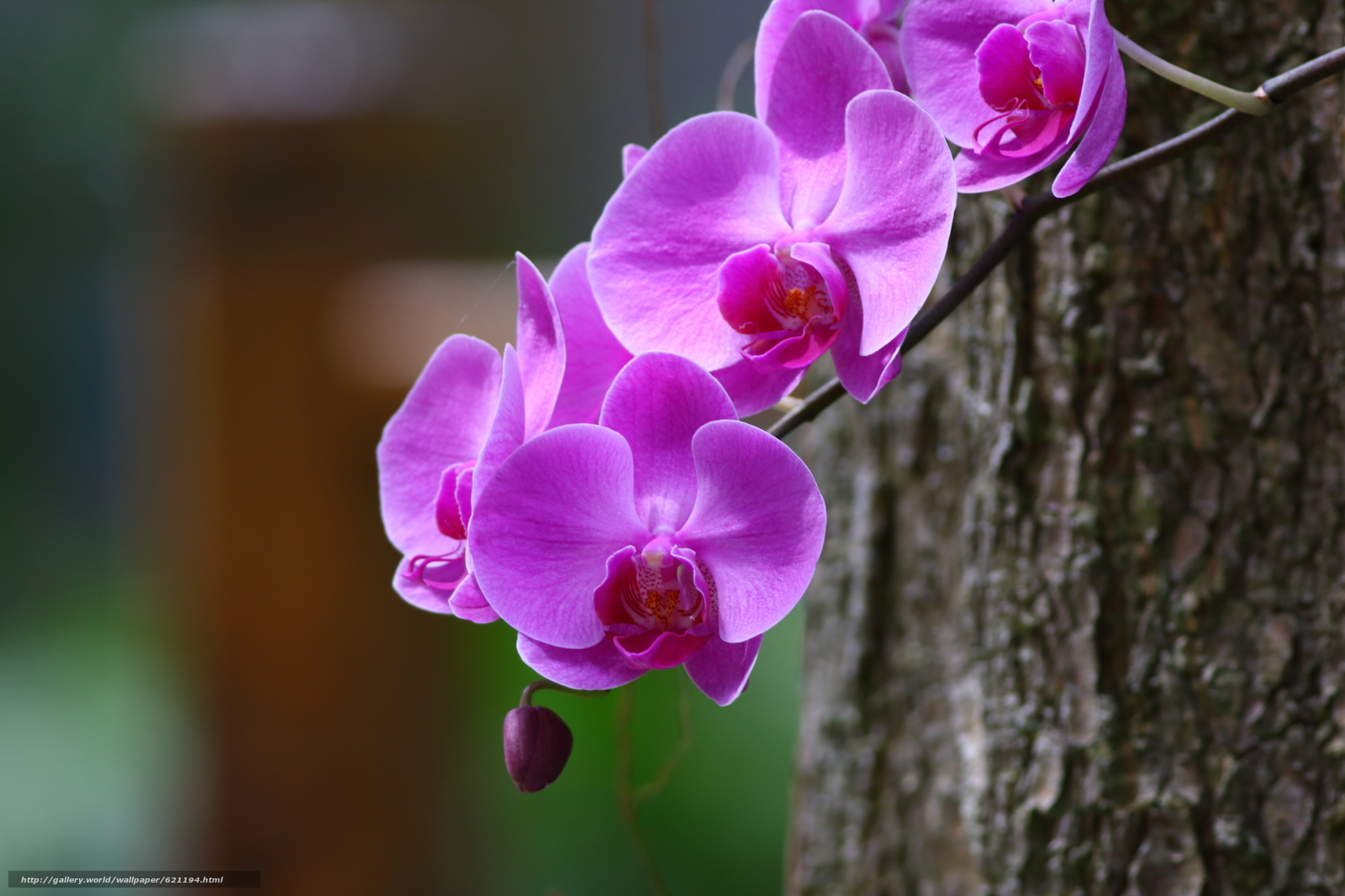Скачать обои орхидея,  ветка,  макро бесплатно для рабочего стола в разрешении 5472x3648 — картинка №621194