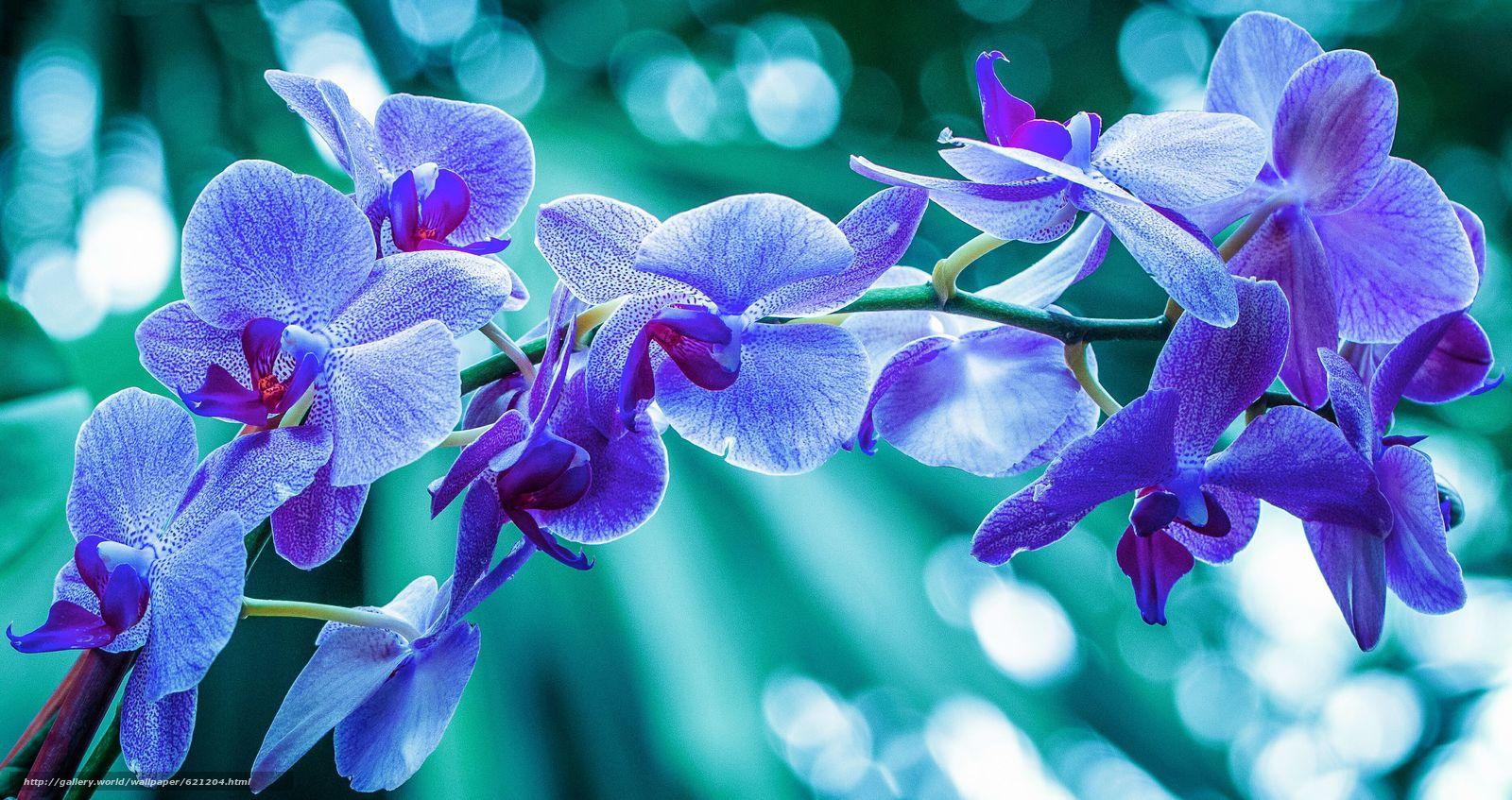 Скачать обои орхидея,  экзотика,  ветка,  макро бесплатно для рабочего стола в разрешении 3742x1982 — картинка №621204