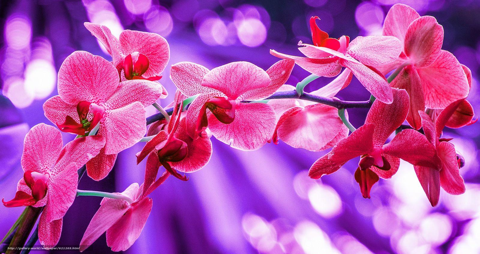Descargar gratis orquídea,  exóticas,  rama,  Macro Fondos de escritorio en la resolucin 3742x1982 — imagen №621205