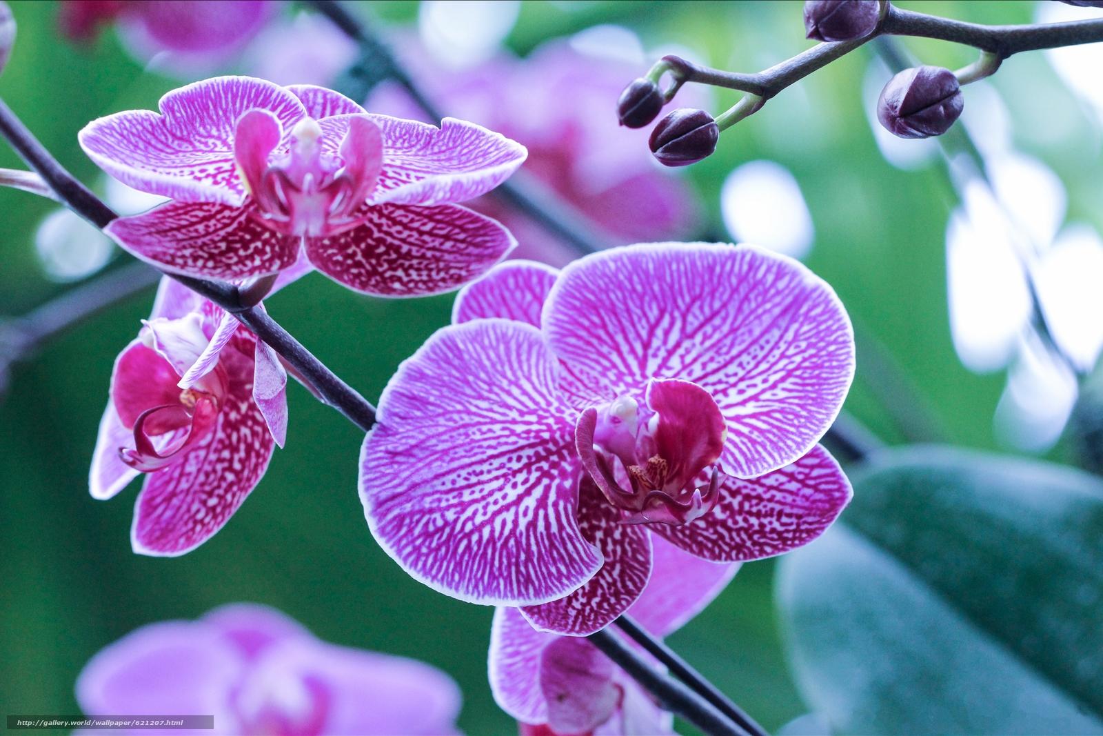 Скачать обои орхидея,  экзотика,  ветка,  макро бесплатно для рабочего стола в разрешении 5184x3458 — картинка №621207