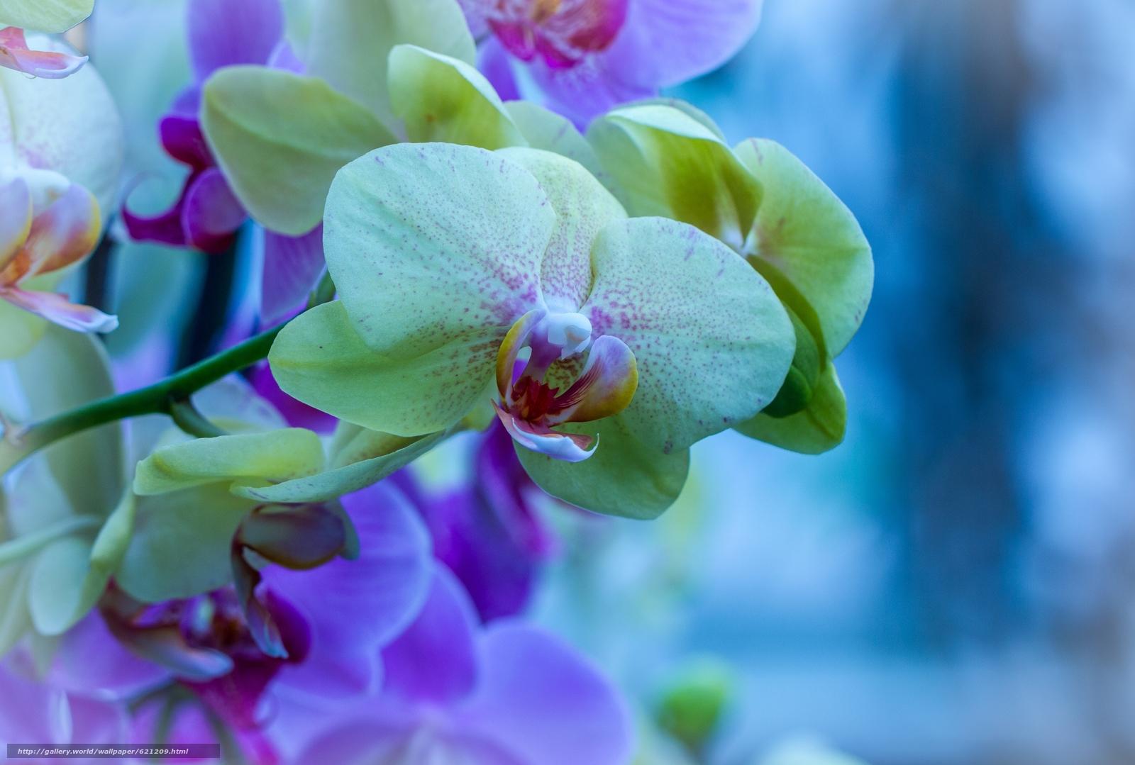 Скачать обои орхидея,  экзотика,  ветка,  макро бесплатно для рабочего стола в разрешении 4316x2911 — картинка №621209
