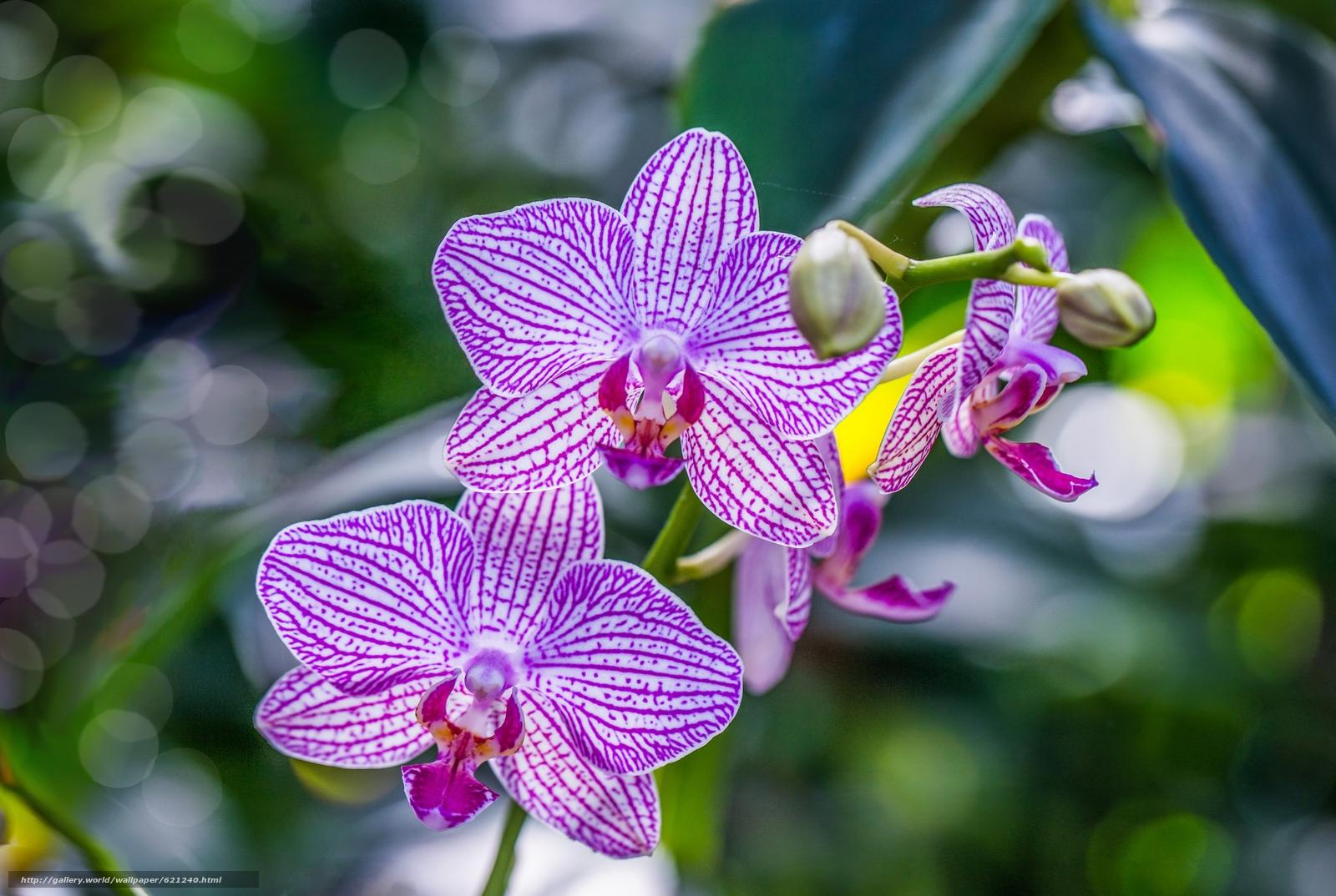 Скачать обои орхидея,  экзотика,  ветка,  макро бесплатно для рабочего стола в разрешении 5434x3648 — картинка №621240