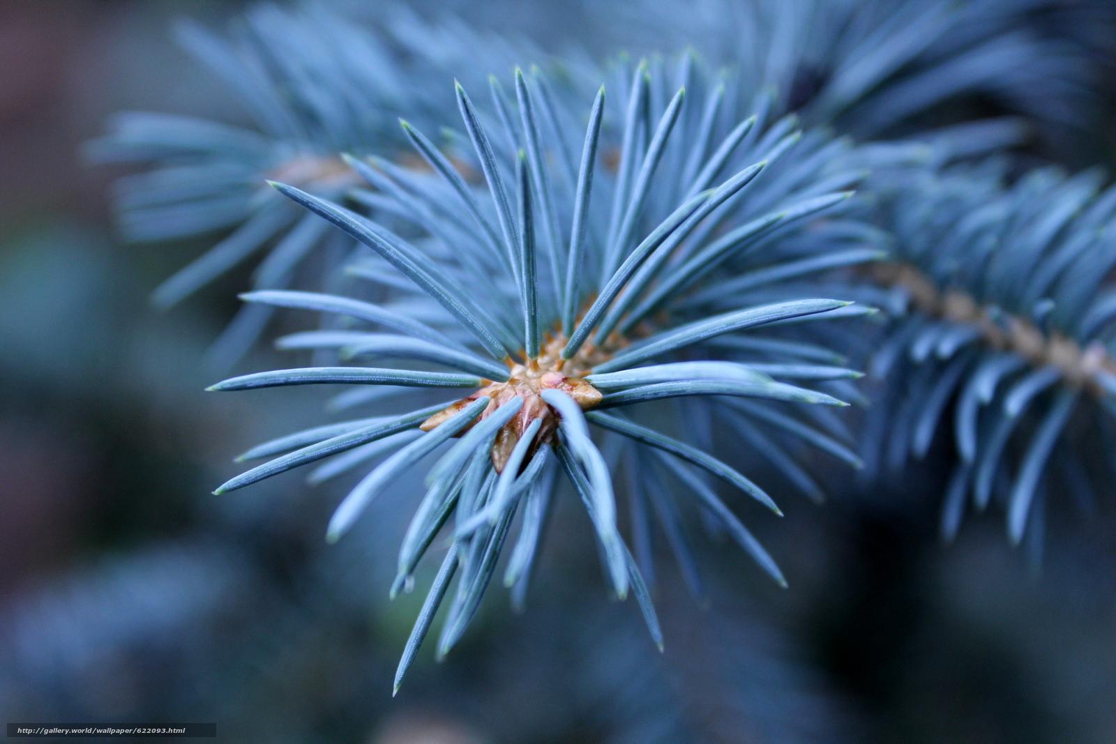 Download wallpaper pine,  branch,  needles,  Macro free desktop wallpaper in the resolution 5184x3456 — picture №622093