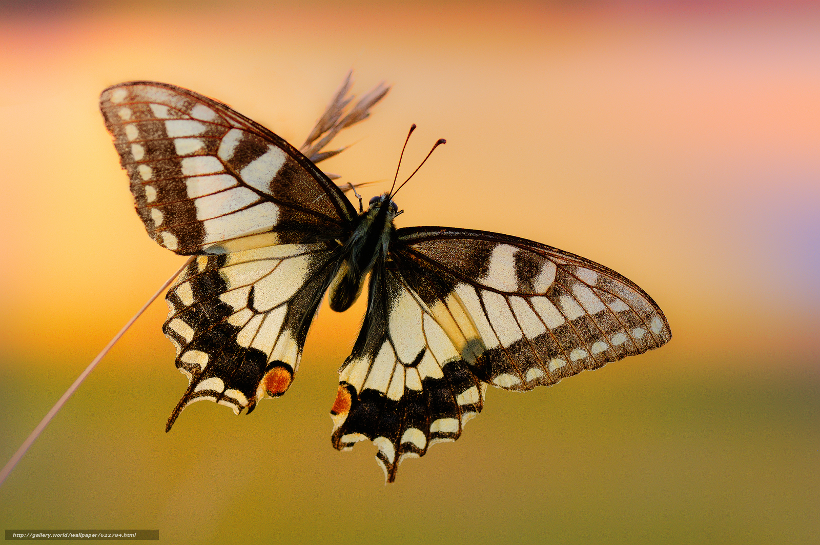 Download wallpaper butterfly,  wings,  Insects,  animals free desktop wallpaper in the resolution 1920x1275 — picture №622784