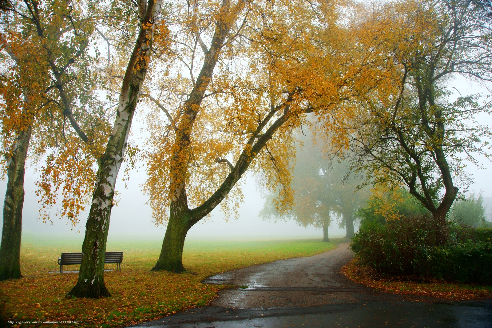 Download wallpaper autumn,  road,  trees,  fog free desktop wallpaper in the resolution 1800x1200 — picture №622981
