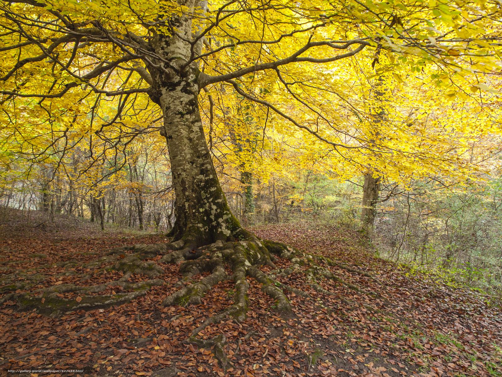 Tlcharger Fond d'ecran automne,  forêt,  arbres,  nature Fonds d'ecran gratuits pour votre rsolution du bureau 4032x3024 — image №622988