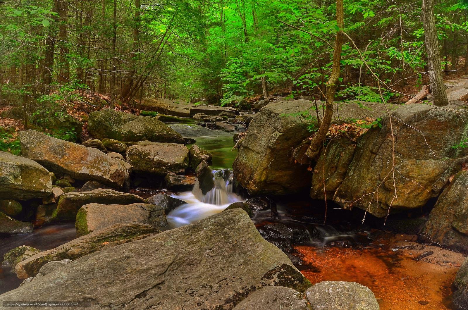 Скачать обои лес,  деревья,  речка,  скалы бесплатно для рабочего стола в разрешении 4928x3264 — картинка №623355