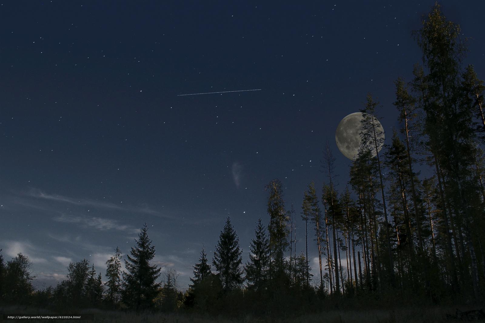 Ночь лес фото