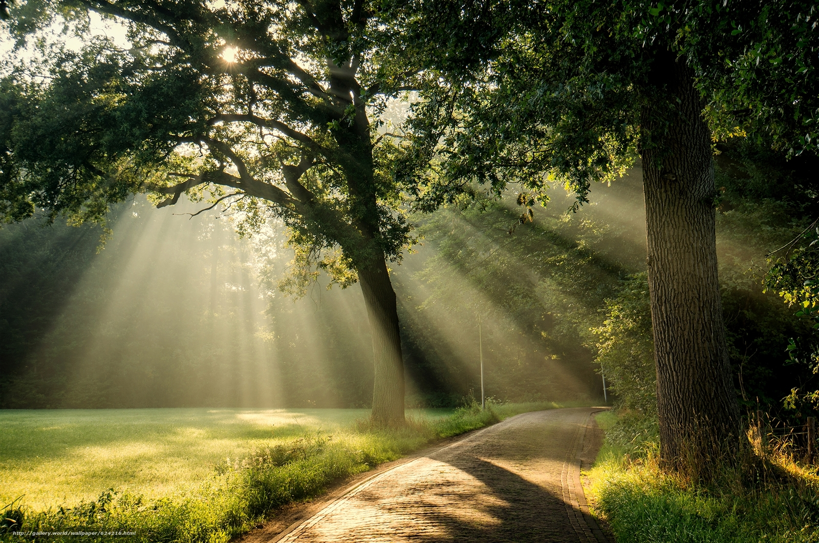 Download wallpaper park,  road,  trees,  sun free desktop wallpaper in the resolution 2000x1325 — picture №624216