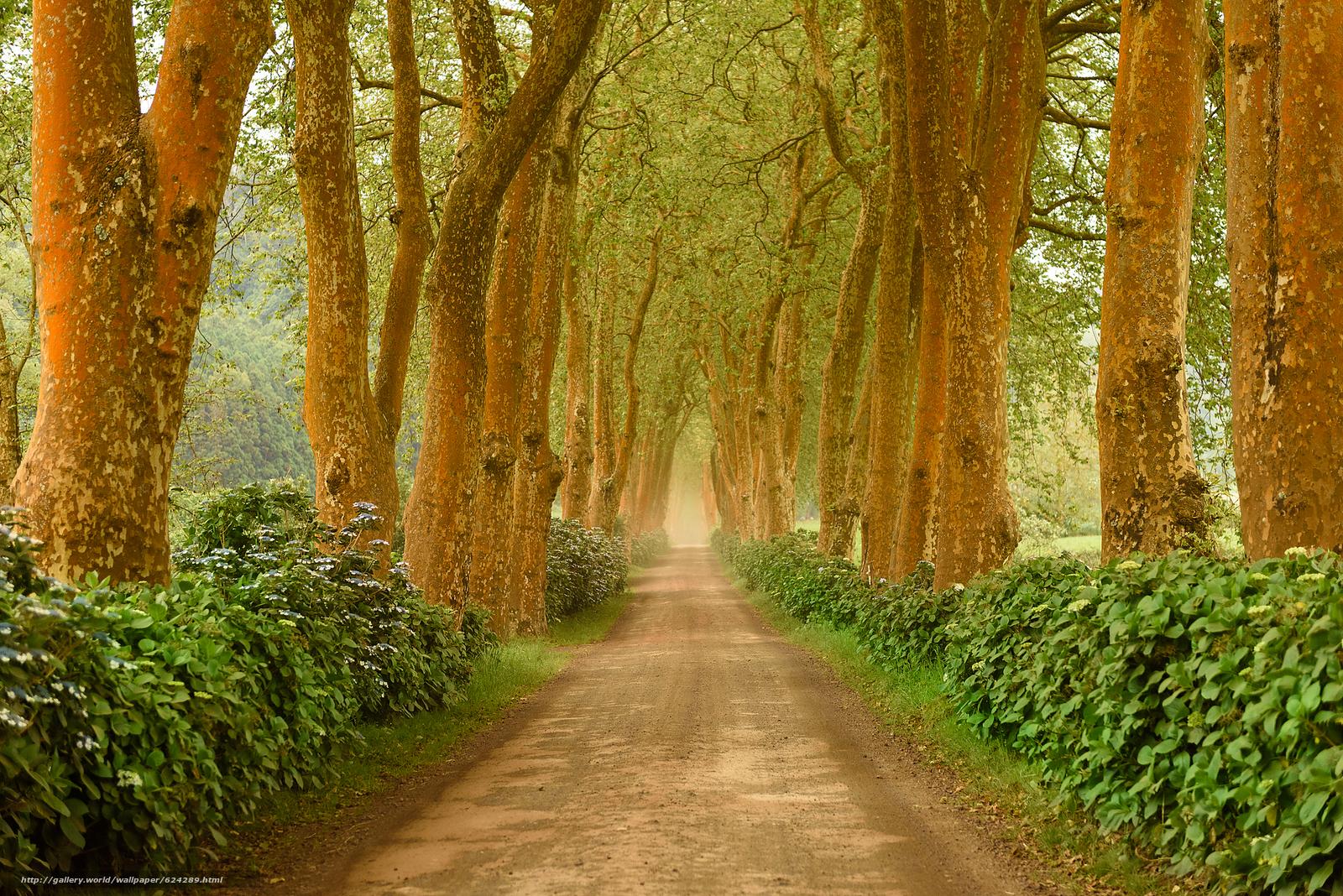 scaricare gli sfondi stradale,  alberi,  paesaggio Sfondi gratis per la risoluzione del desktop 1920x1281 — immagine №624289