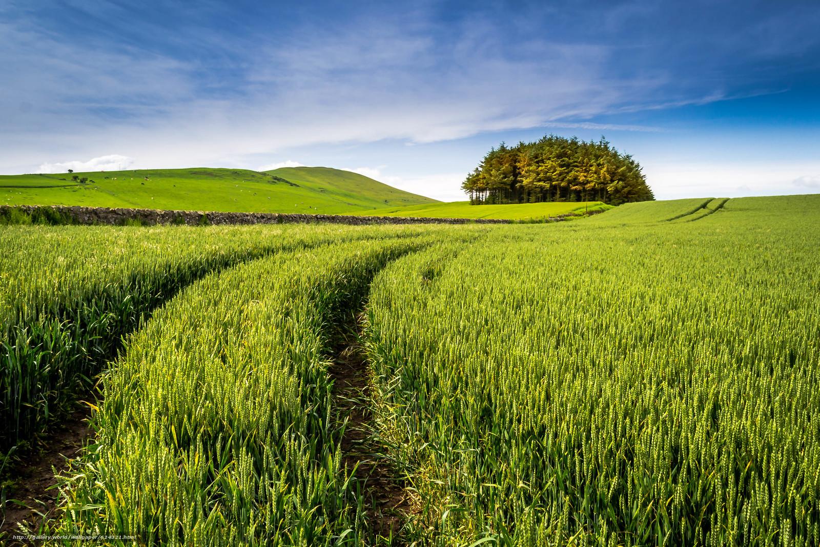 Download wallpaper field,  ears of corn,  trees,  landscape free desktop wallpaper in the resolution 4122x2748 — picture №624321