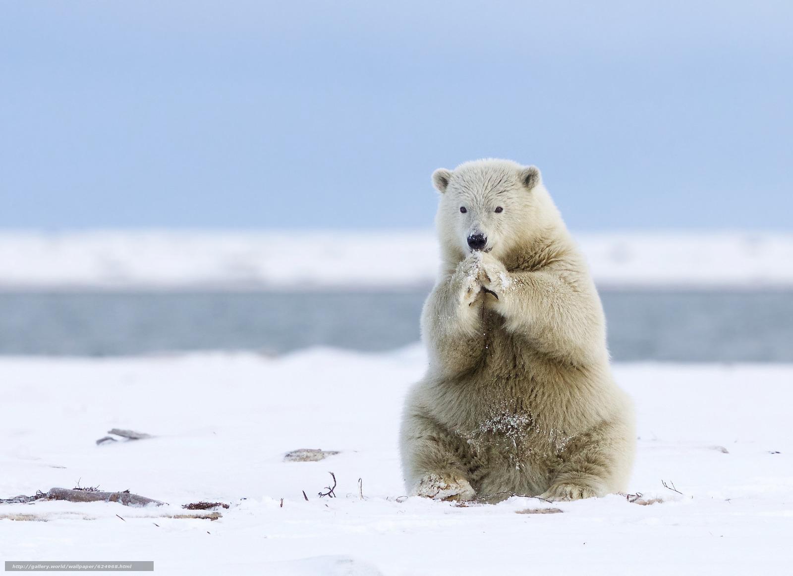 scaricare gli sfondi alaska - photo #5