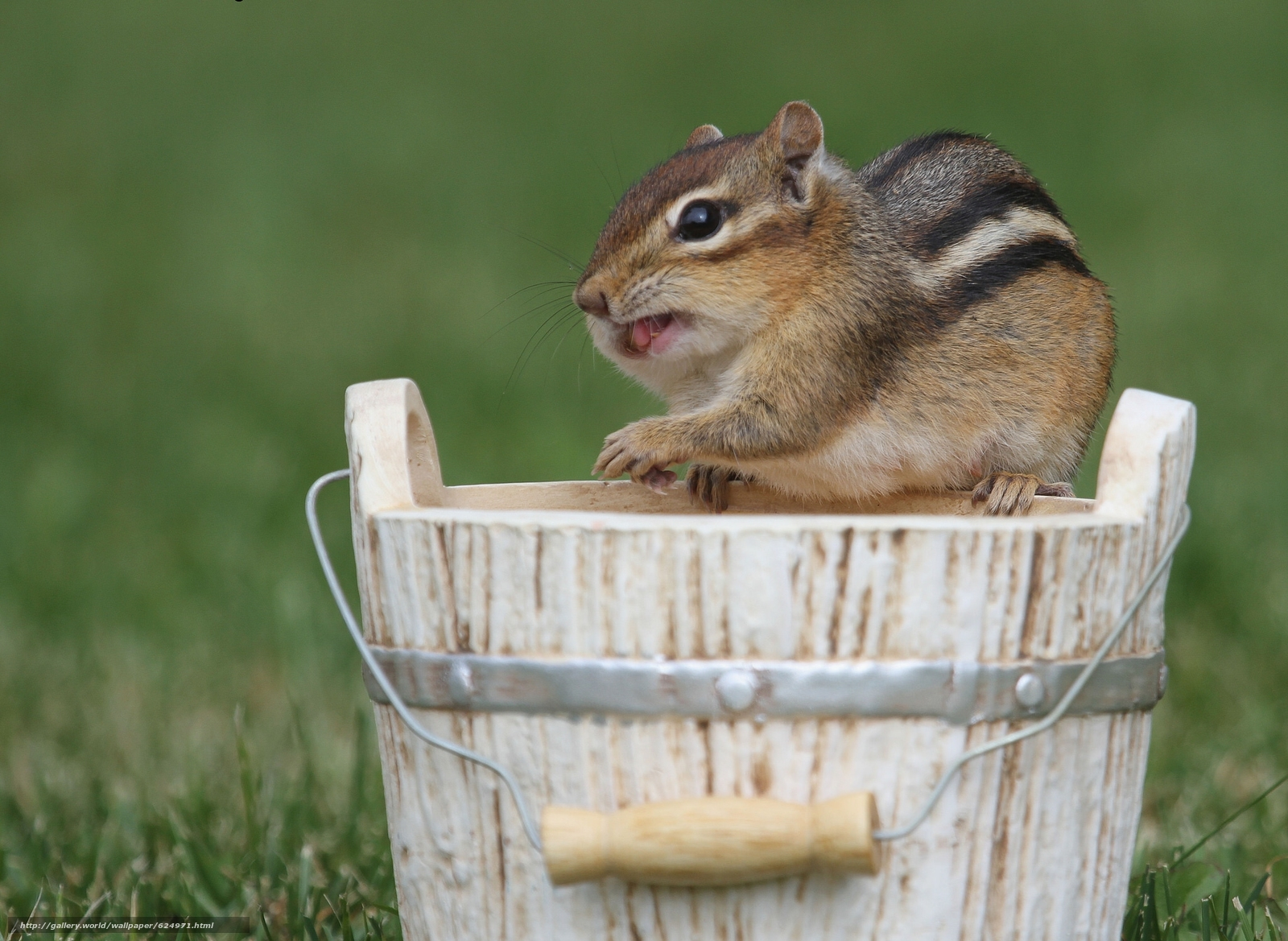 Download wallpaper chipmunk,  rodent,  bucket free desktop wallpaper in the resolution 2048x1496 — picture №624971