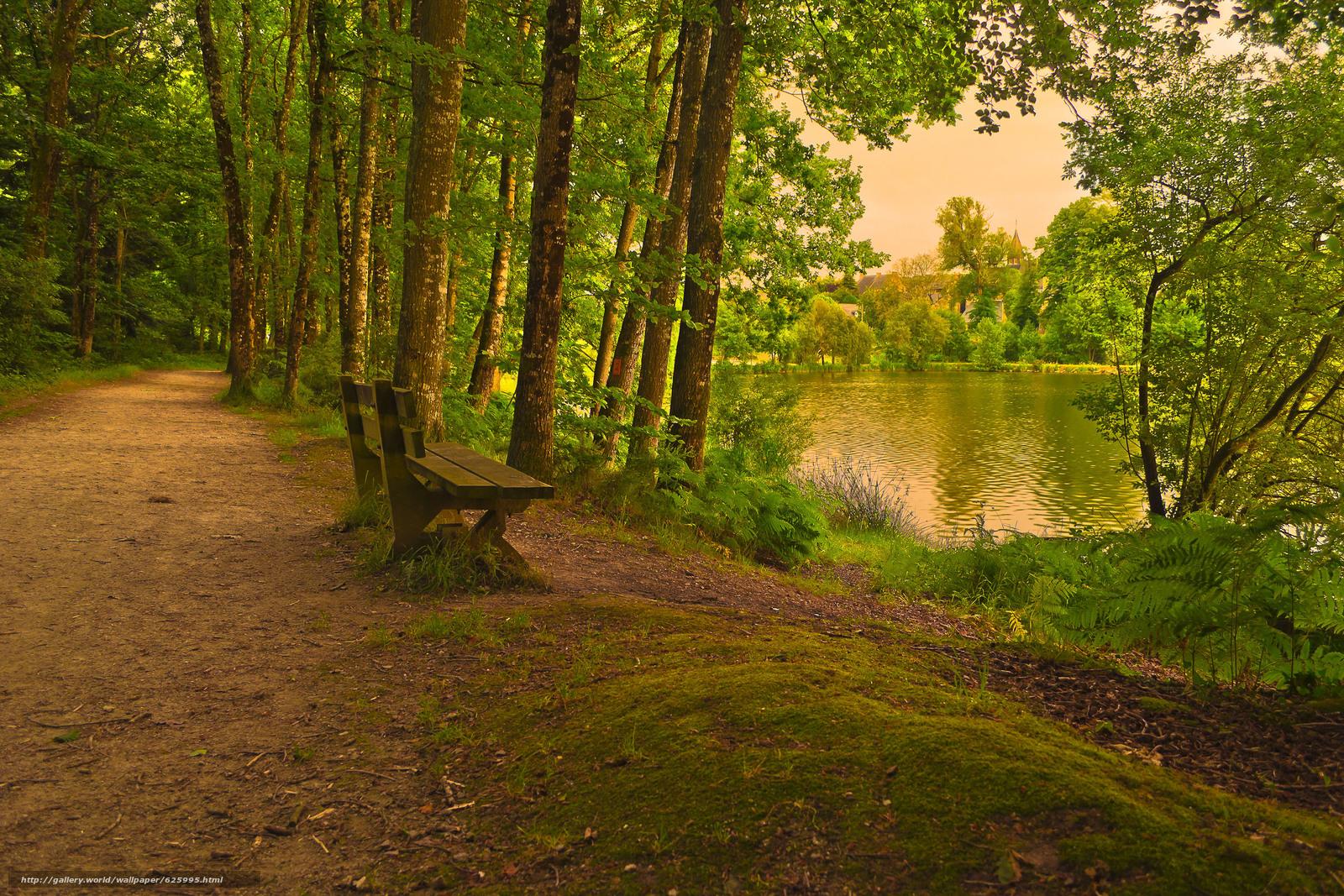 下载壁纸 公园, 森林, 道路, 湖 免费为您的桌面分辨率的壁纸 3072x