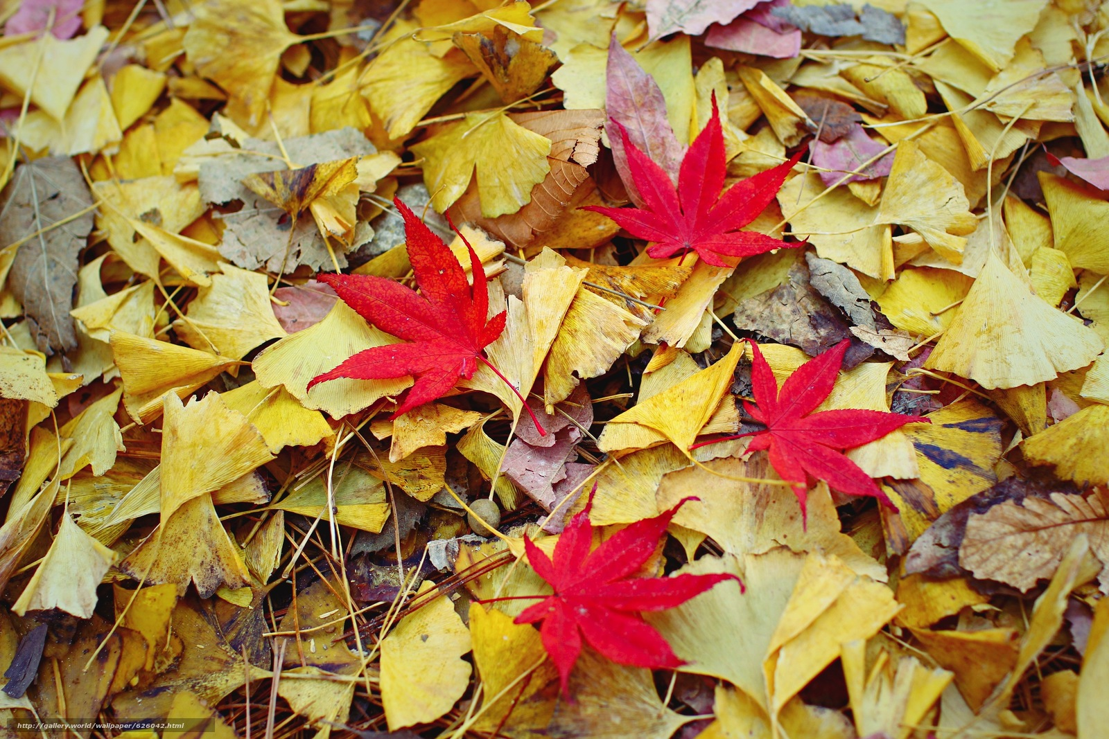 Download wallpaper foliage,  autumn,  nature free desktop wallpaper in the resolution 2592x1728 — picture №626042
