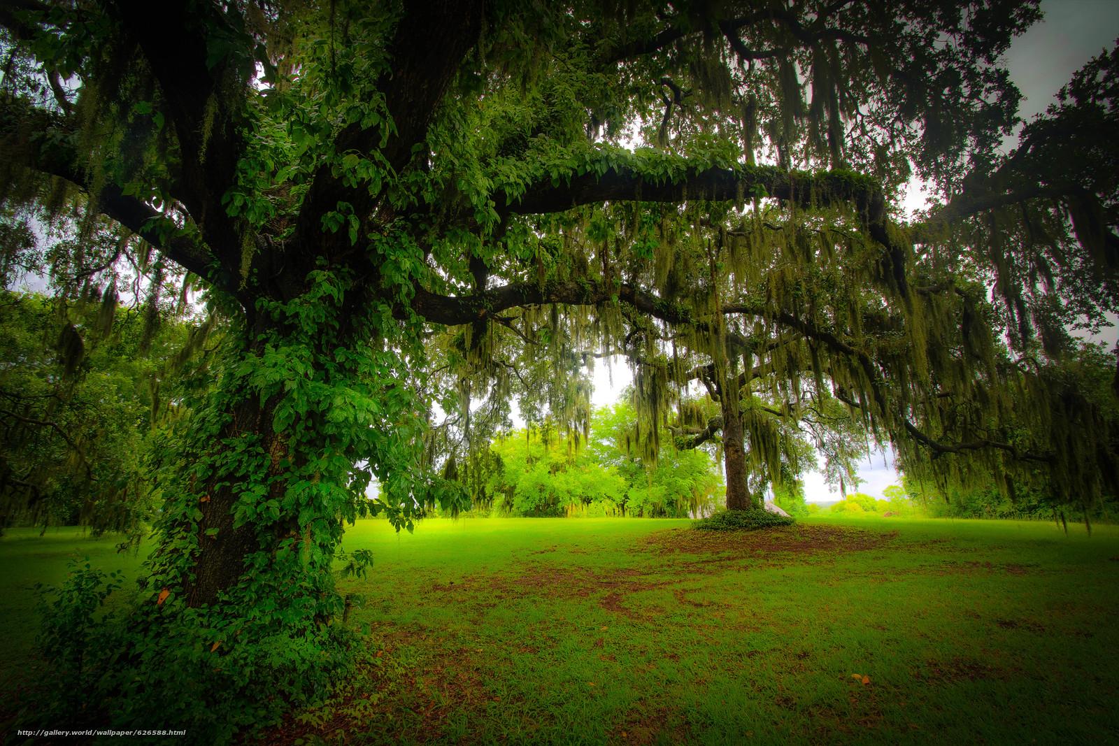下载壁纸 林间空地,  树,  性质 免费为您的桌面分辨率的壁纸 5183x3455 — 图片 №626588