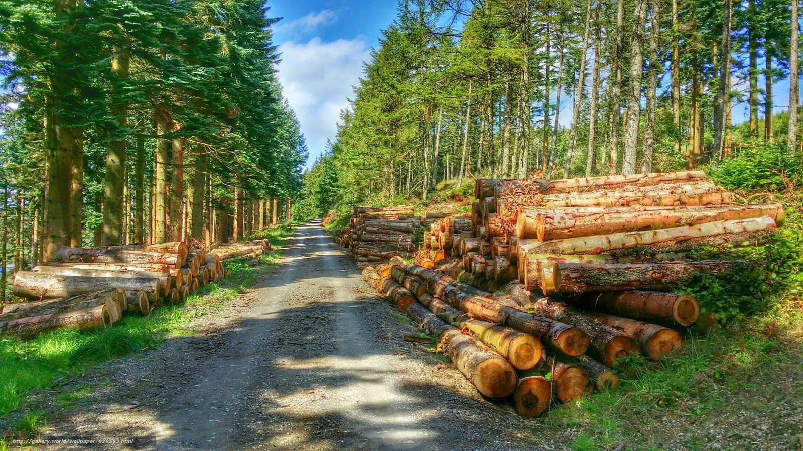 Tlcharger Fond D'ecran Forêt, Route, Arbres, JOURNAUX