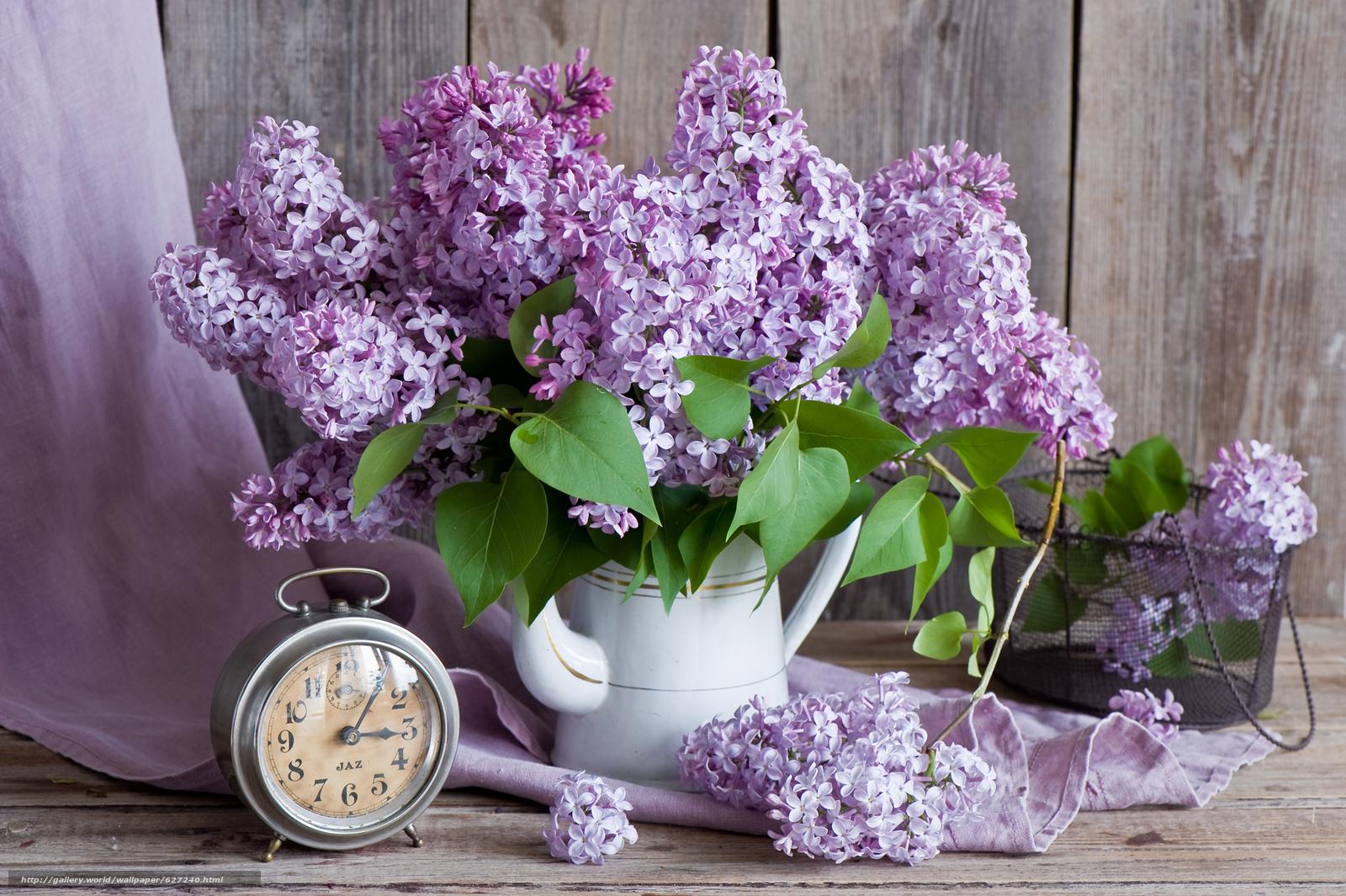 Tlcharger fond d 39 ecran lilas bouquet r veil voir fonds for Bouquet de fleurs lilas