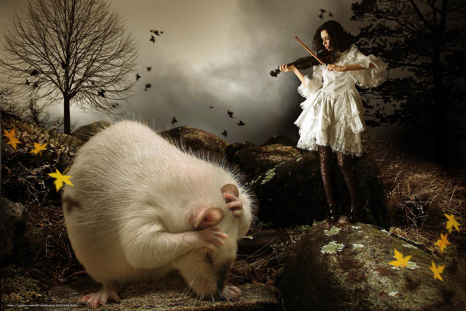 Download wallpaper girl,  violin,  rat free desktop wallpaper in the resolution 2448x1632 — picture №627248