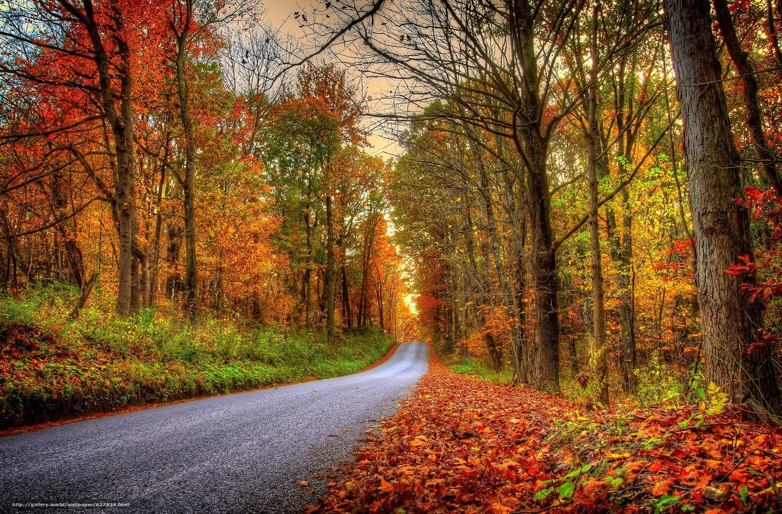 Download wallpaper autumn,  road,  forest,  park free desktop wallpaper in the resolution 2048x1345 — picture №627839