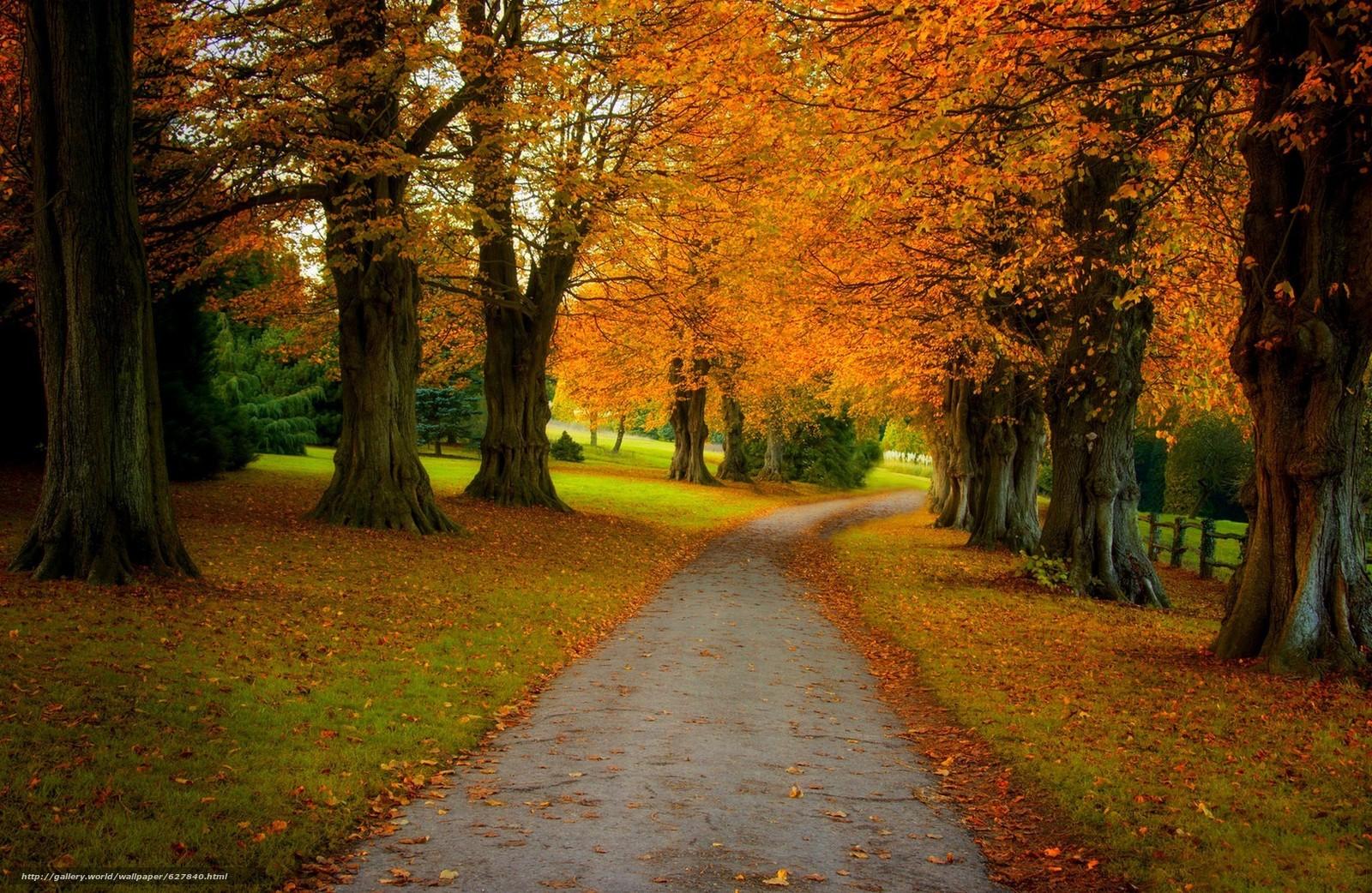Download Hintergrund Herbst,  Straße,  Wald,  Park Freie desktop Tapeten in der Auflosung 2048x1334 — bild №627840