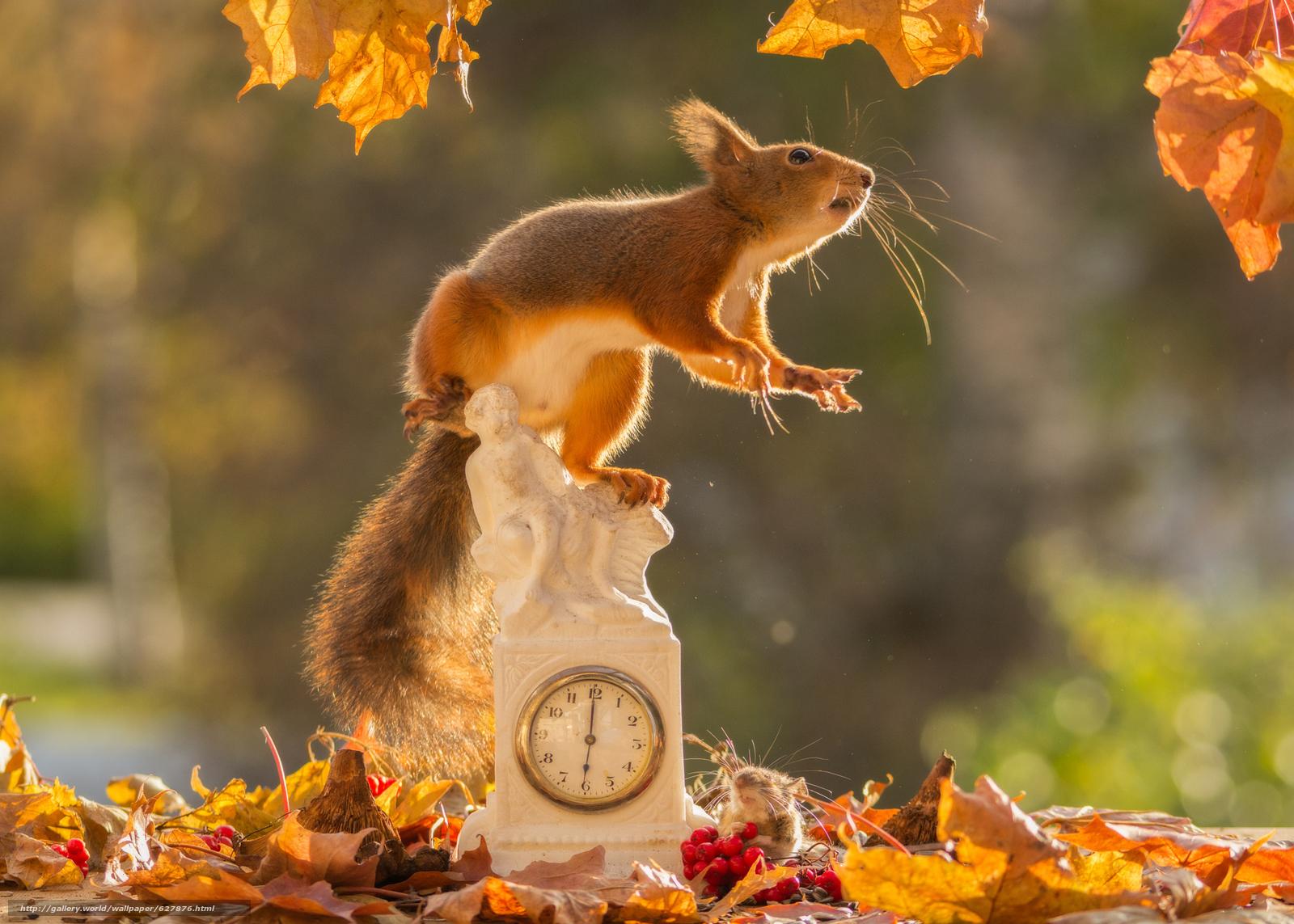 scaricare gli sfondi scoiattolo,  Redhead,  topo,  guardare Sfondi gratis per la risoluzione del desktop 2048x1463 — immagine №627876
