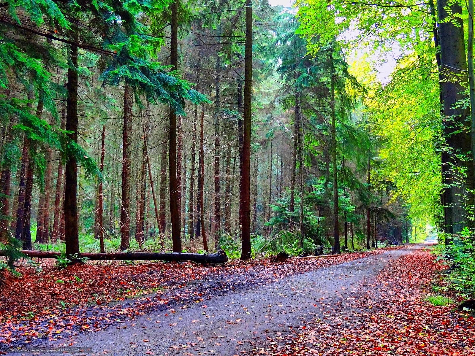 Tlcharger Fond d'ecran forêt,  route,  arbres,  paysage Fonds d'ecran gratuits pour votre rsolution du bureau 1600x1200 — image №628060
